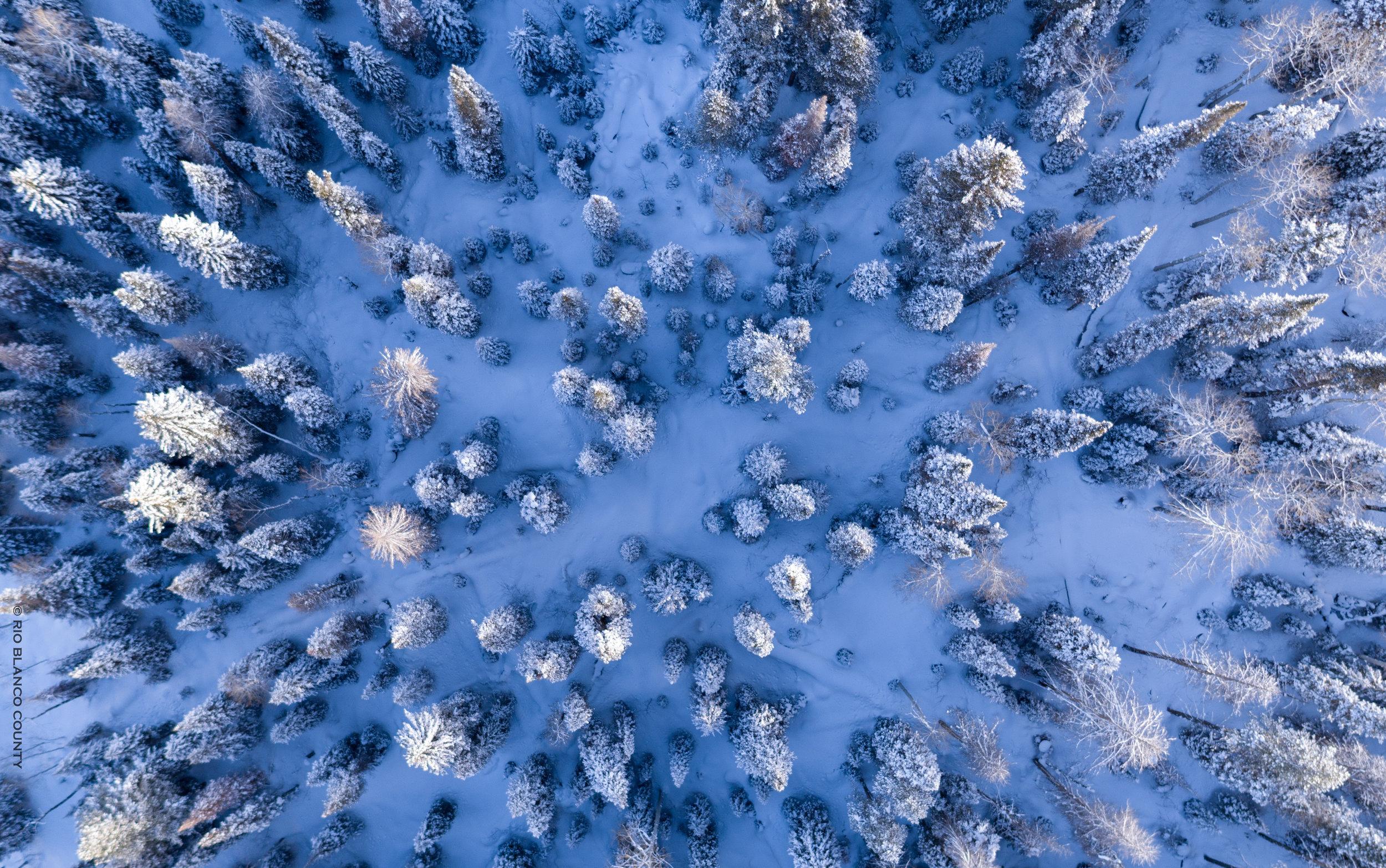 WRNF Winter 2.jpg