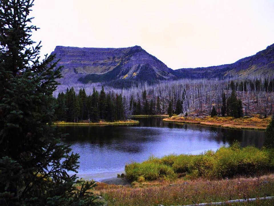 Gina Ray - Lake Talquin.jpg