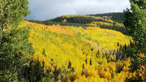 Golden Trees_Bob Amick.jpg