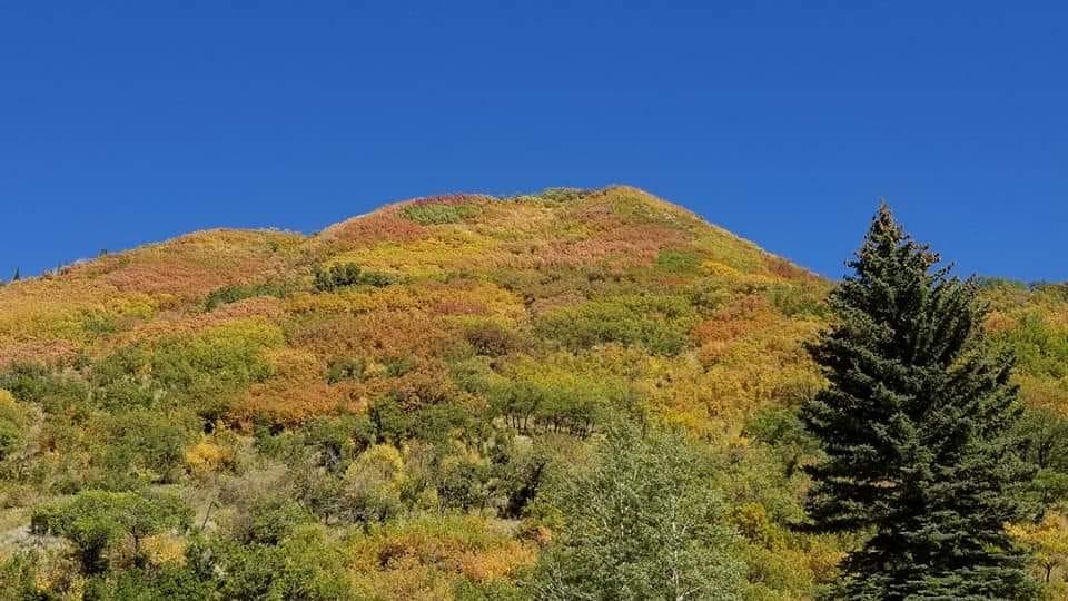 Jason Spieth - fall hill.jpg