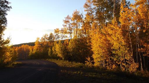 Sun on Trees_Bob Amick.jpg