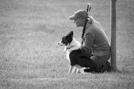 2017 Meeker Sheepdog Trials - Copy.jpg