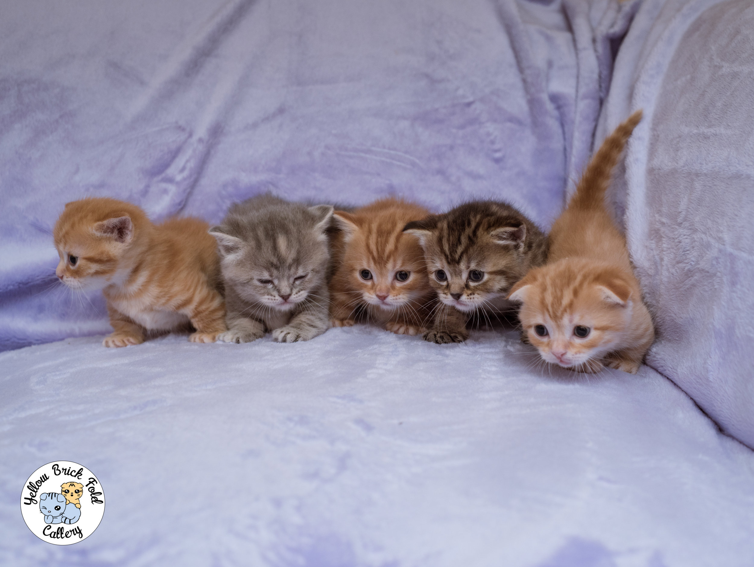 CLICK HERE FOR PHOTOS OF PREVIOUS KITTENS!!! -