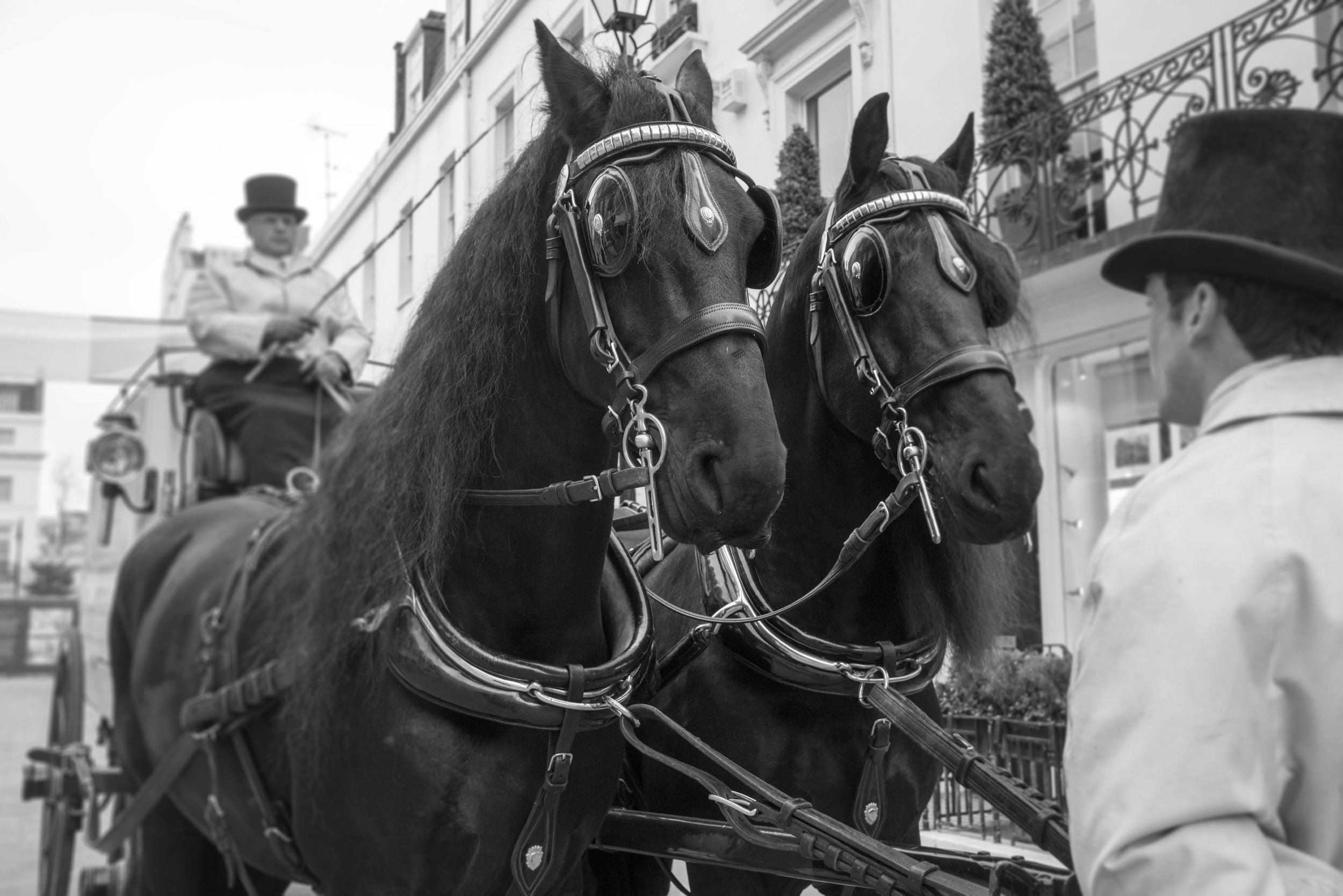 Horses 5 B&W copy.jpg