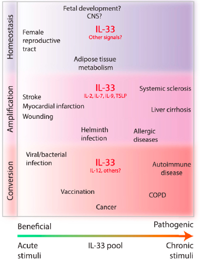 IL-33 in health and disease