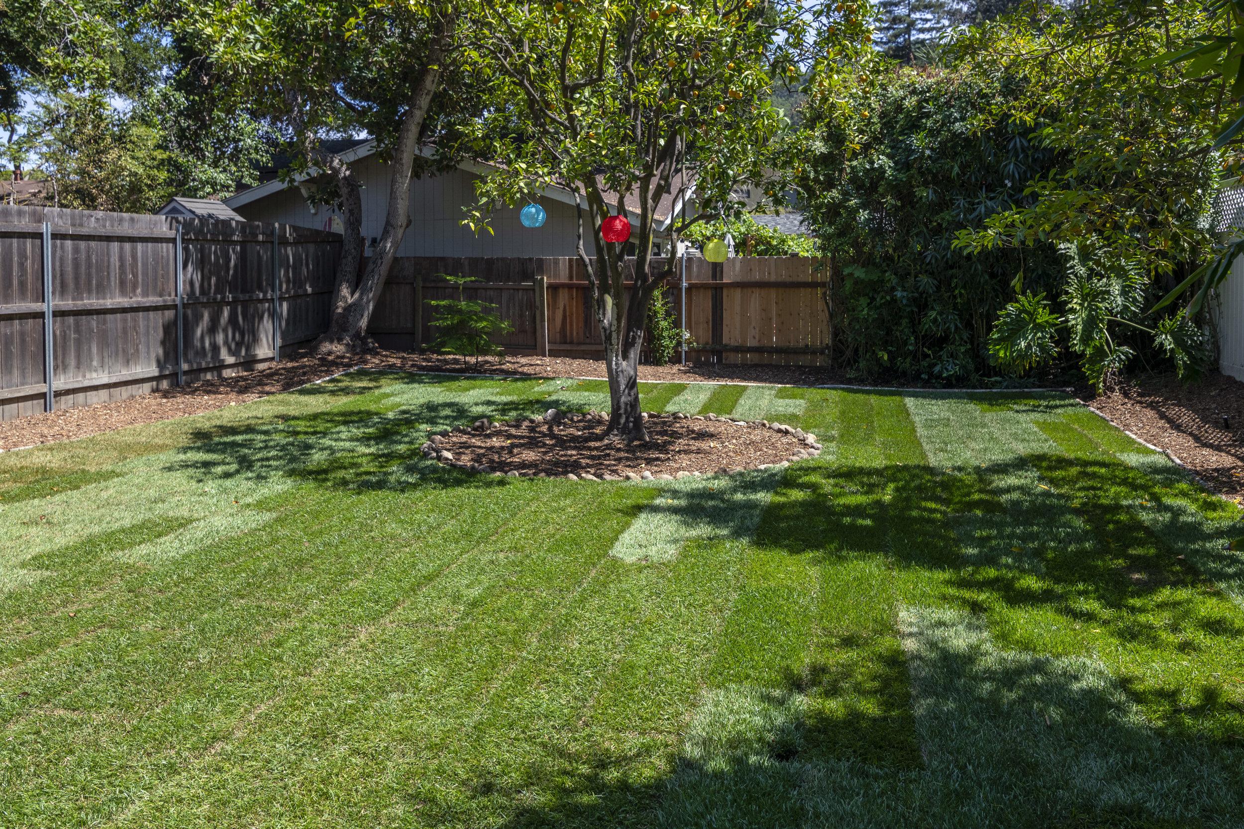 913 W Victoria Grass & Orange Tree Lanterns.jpg