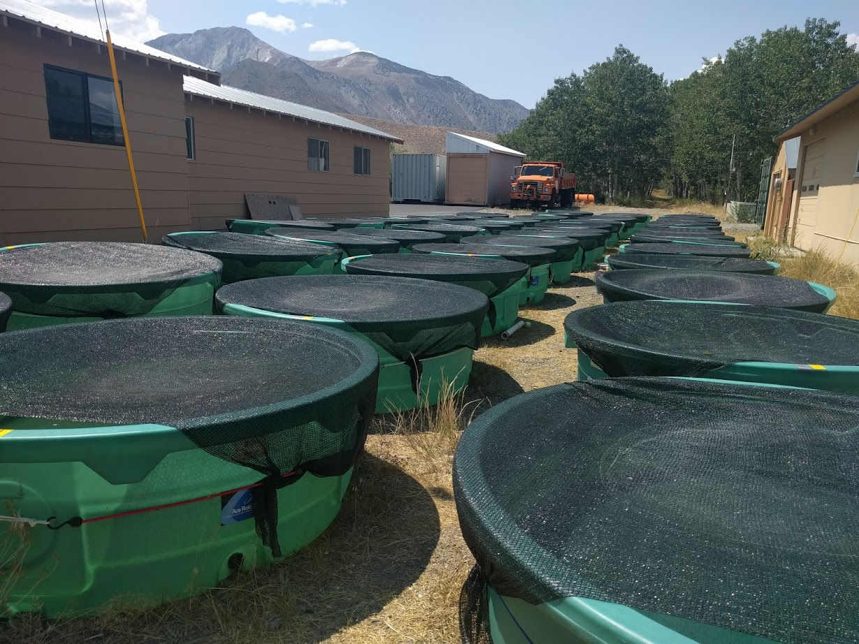 Mesocosm experiment at     SNARL   near Yosemite testing how predation modifies the establishment of range shifting species