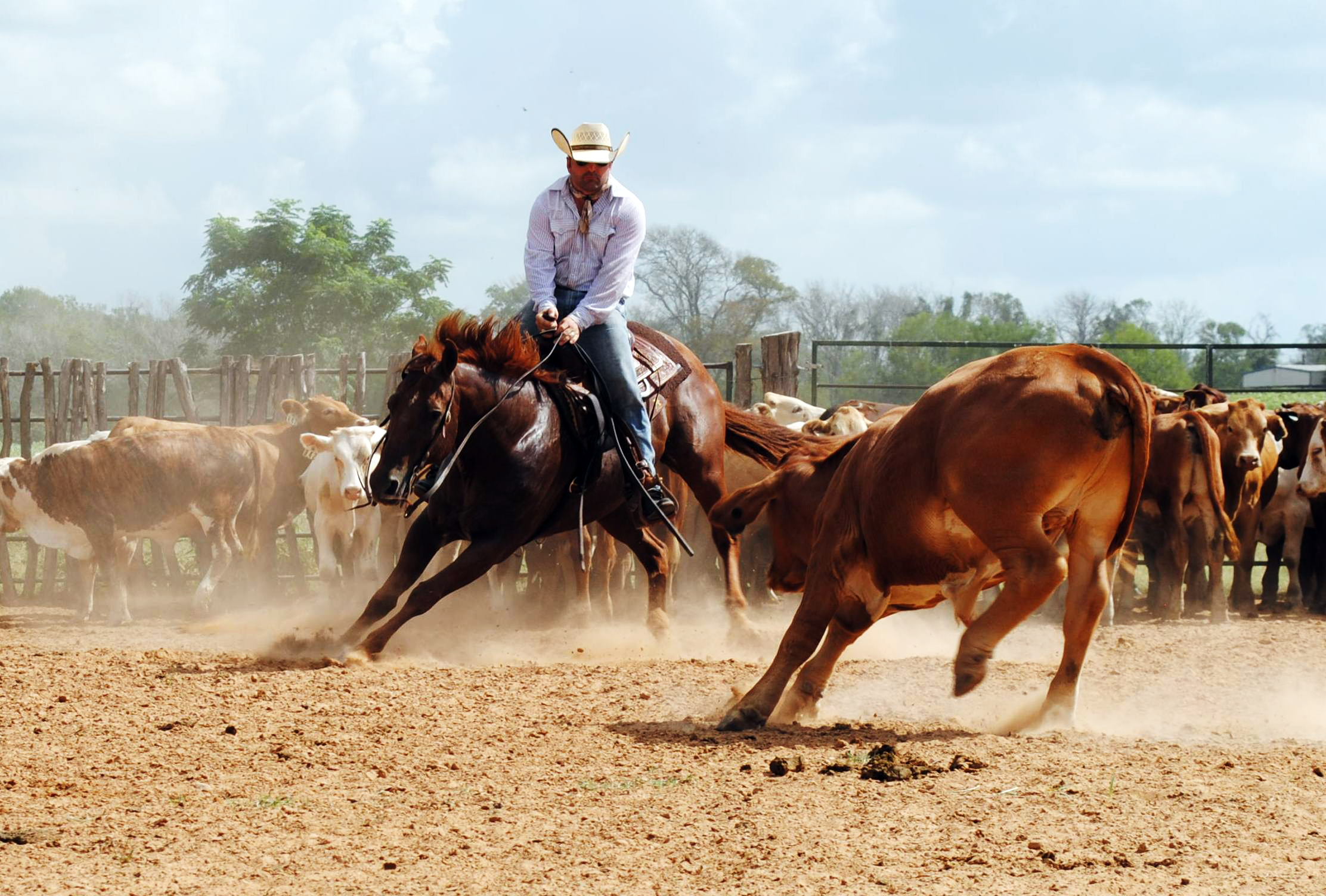 Blog post author, Steven Kahla, working a cow in the cutting pen. Check out  THAT GUY BRANDS .