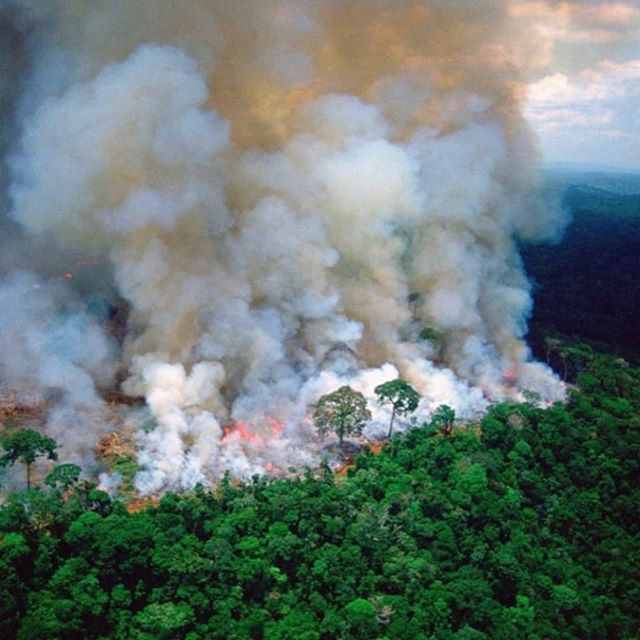 🔥Røyken kan sees fra universet🤦🏼♀️ . 🔥Akkurat nå står regnskogen i brann, på 17 dagen.. og det er den mest ødelegge vi har sett så langt(tenk at det ikke fikk mediedekning før i går🆘). Brannen sprer seg raskere enn noen gang, og den har til og med mørklagt Sao Paulo, en by som ligger 270 mil unna og ikke bare det, men brannen kan sees fra universet🌌 🤦🏼♀️ pluss det er vi mennesker som både har startet den(bønder) og får den til å akslererer pga søppel og food waste som ligger rundt forbi og produserer metangass 😬 . Så langt i år har det vært over 72.000 skogbranner i Amazonas, noe som er en økning på 83 % fra i fjor.. . Hvorfor bør vi bry oss? .  Jo, fordi regnskogen produserer mellom 17-20 % av all oksygen i verden, binder karbon i jorden som forhindrer klimaoppvarming og huser 1/10 av verdens dyrearter og 1 million mennesker! . Hva kan vi gjøre? . ✔️Ikke kjøp produkter som har fòr basert på soya som kommer fra regnskogen, noe som gjelder stort sett all fiske- og kjøttprodukter her i Norge 😅 og andre produkter der i fra... Igjen, husk⚠️ penger er stemmeseddeler til hva vi ønsker skal fortsette, og dette må vi nå stoppe en gang for alle. Våre bønder må finne andre steder å få fôr fra, sorry, og det er vi må få dem til å endre vaner! Det er vi som har makt! ✔️ Det går an å donere til front line grupper som jobber i feltet med å stoppe brannen. ✔️Del informasjonen ✔️Støtt regnskog fondet ✔️Stem på politikere som tar dette på alvor. Snart er det kommunevalg!! DO IT! ⚠️Spread the word!⚠️ . #amazonas #samfunn #oslo #norge #news #breakingnews #world #help #fire #wood #politikk #mdg #livsstil #bærefraft #klima #miljø#miljøvennlig #climatechange #sustainability