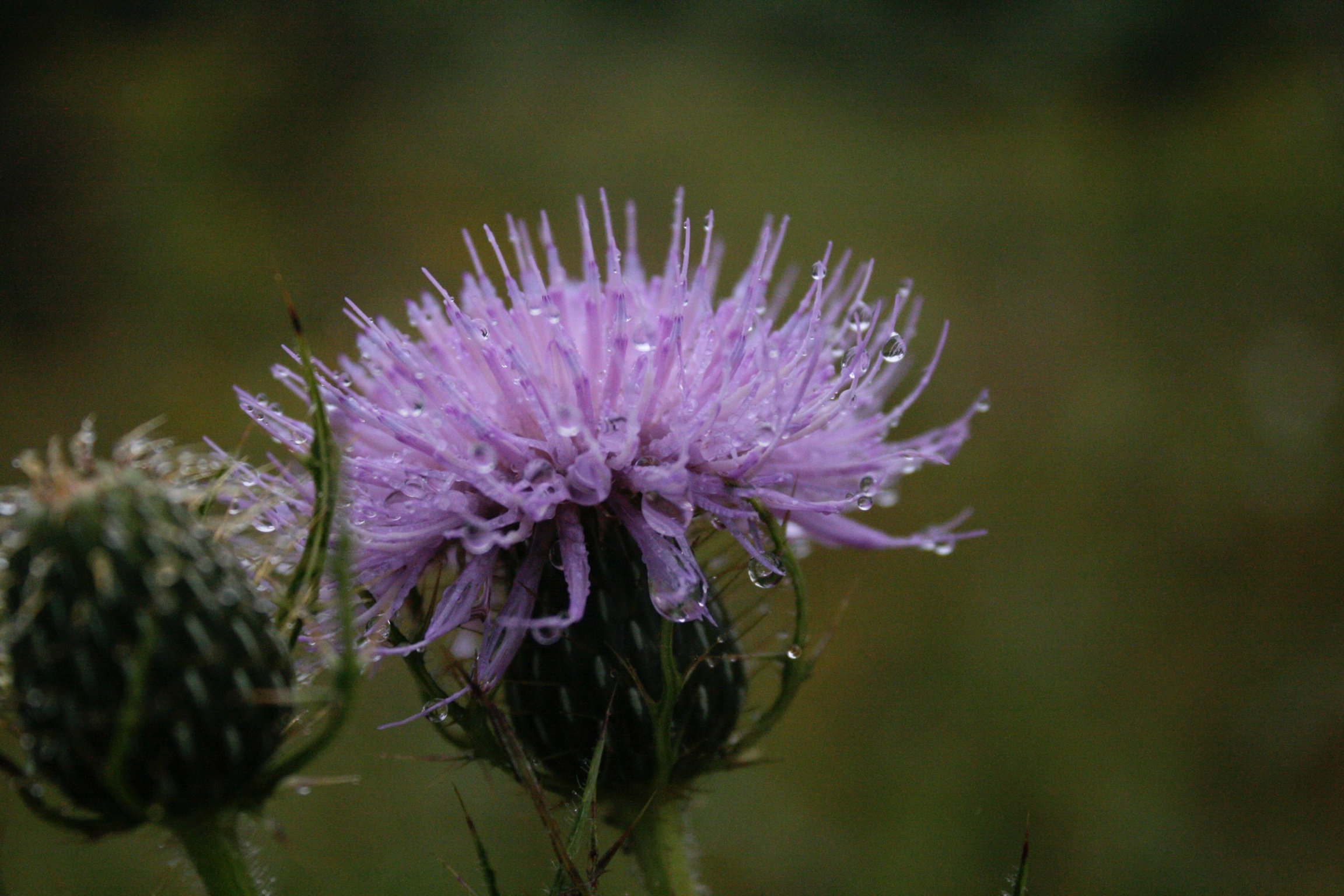Acupuncture-flower.jpg