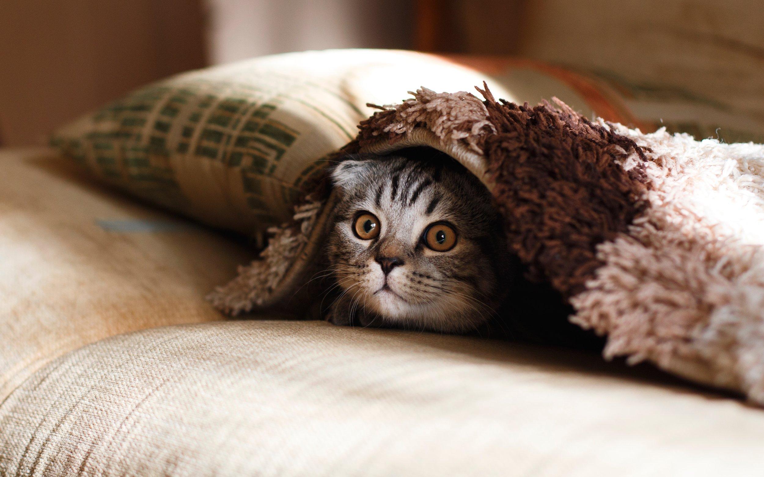Safety Intimacy Vulnerability Cat