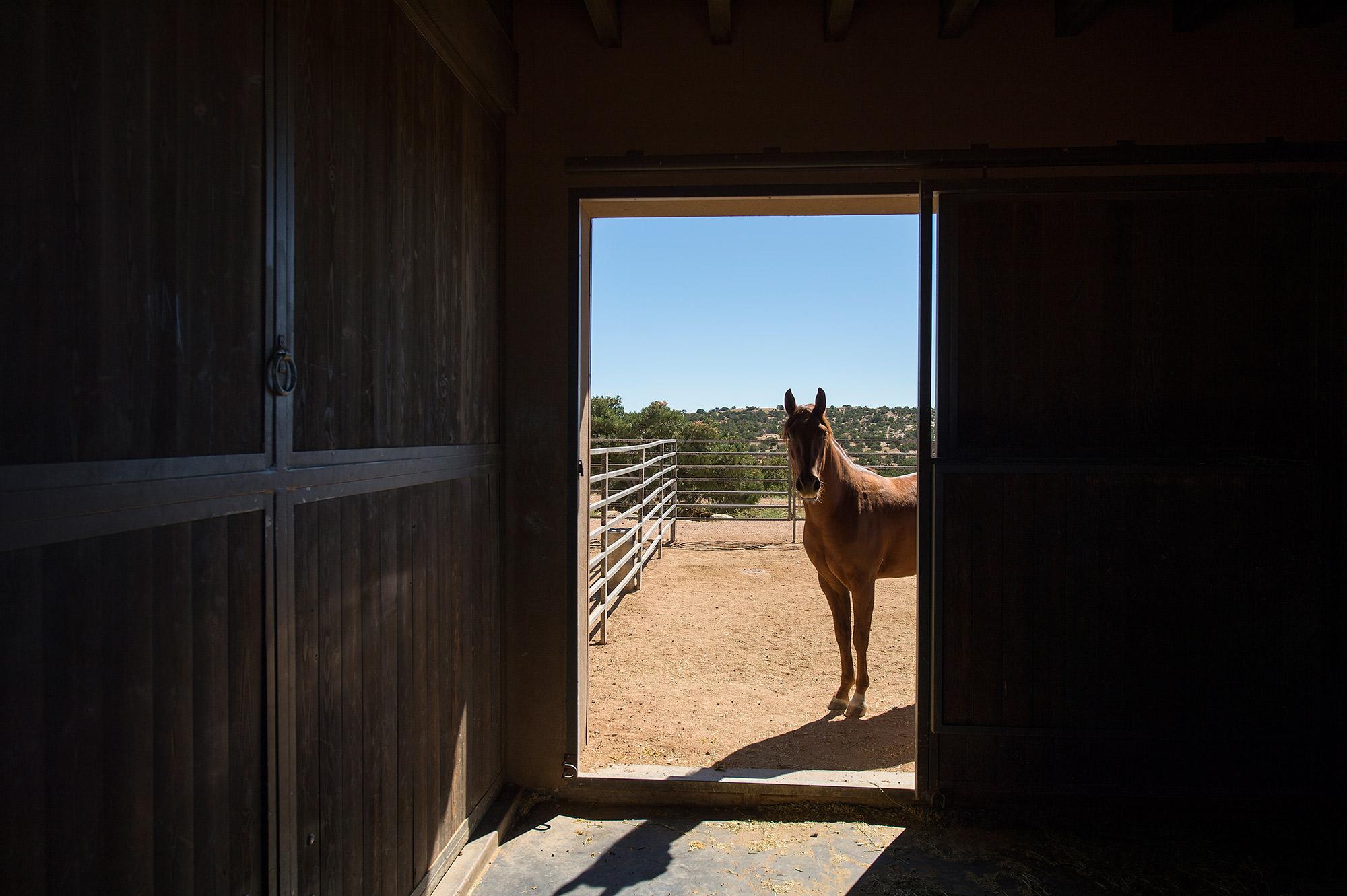 TF-Ranch125_2x.jpg