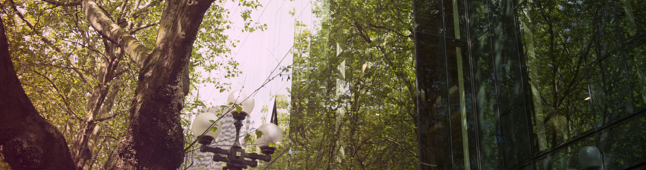 Wide picture of city and trees reflecting at upstream music festival with sensebellum