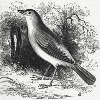 The Nightingales Nest - Richard Lambert