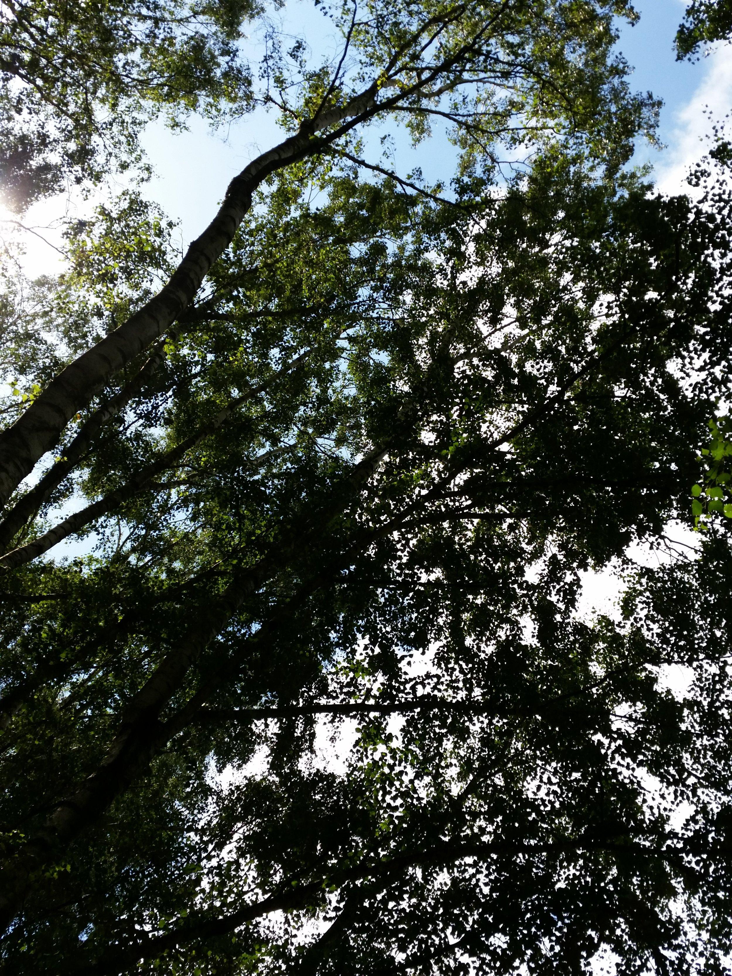 Zum Abschluss ein Baum. Quelle: Sash