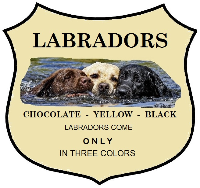 """HDLRC, in conjunction with all reputable Labrador clubs throughout the world only recognizes the three accepted colors of the Labrador Retriever: black, chocolate, and yellow.  We do not support the breeding of dilute-colored Labradors, commonly referred to as """"silver,"""" """"charcoal,"""" and """"champagne."""""""