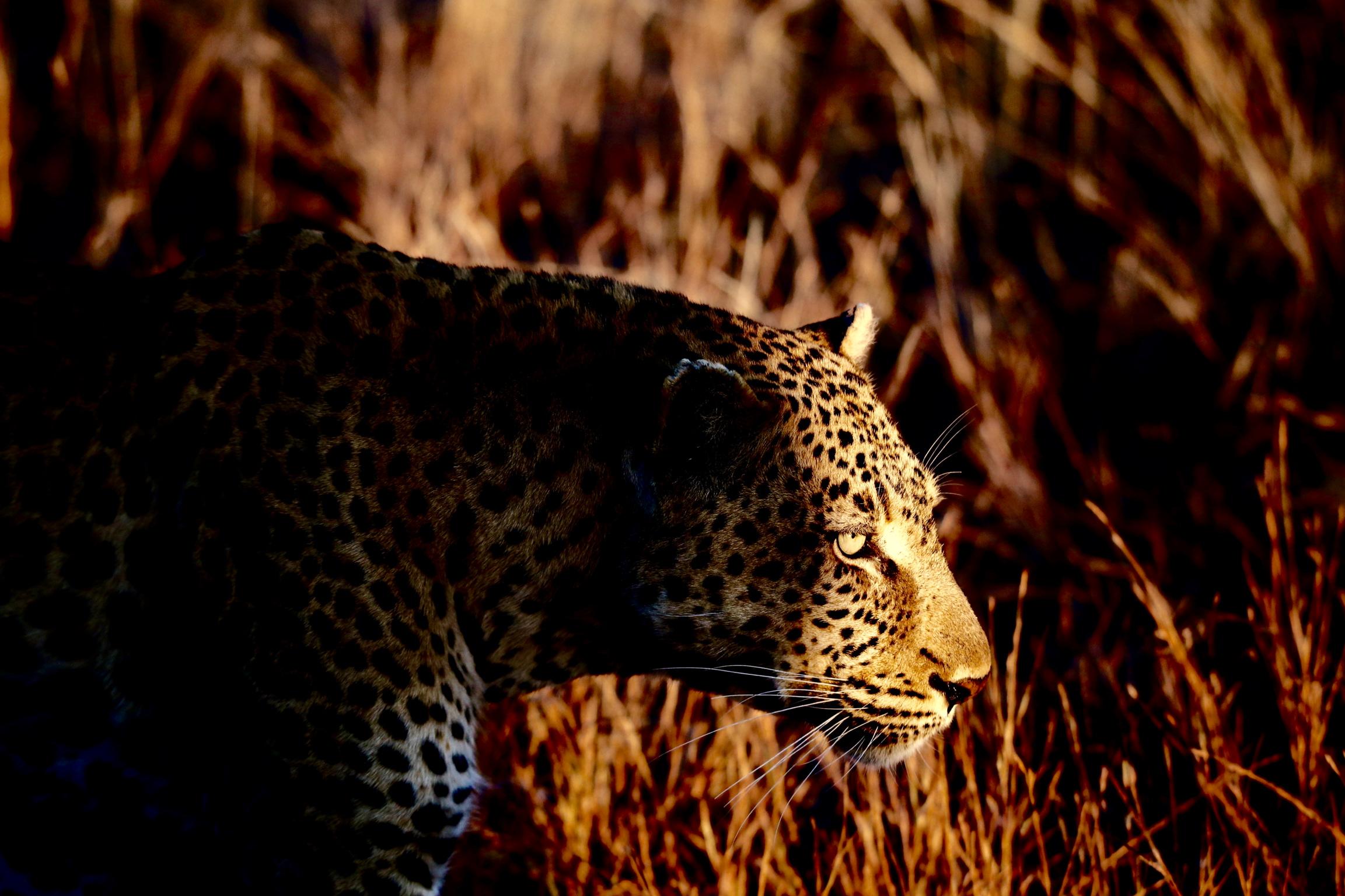 Hoedspruit, South Africa