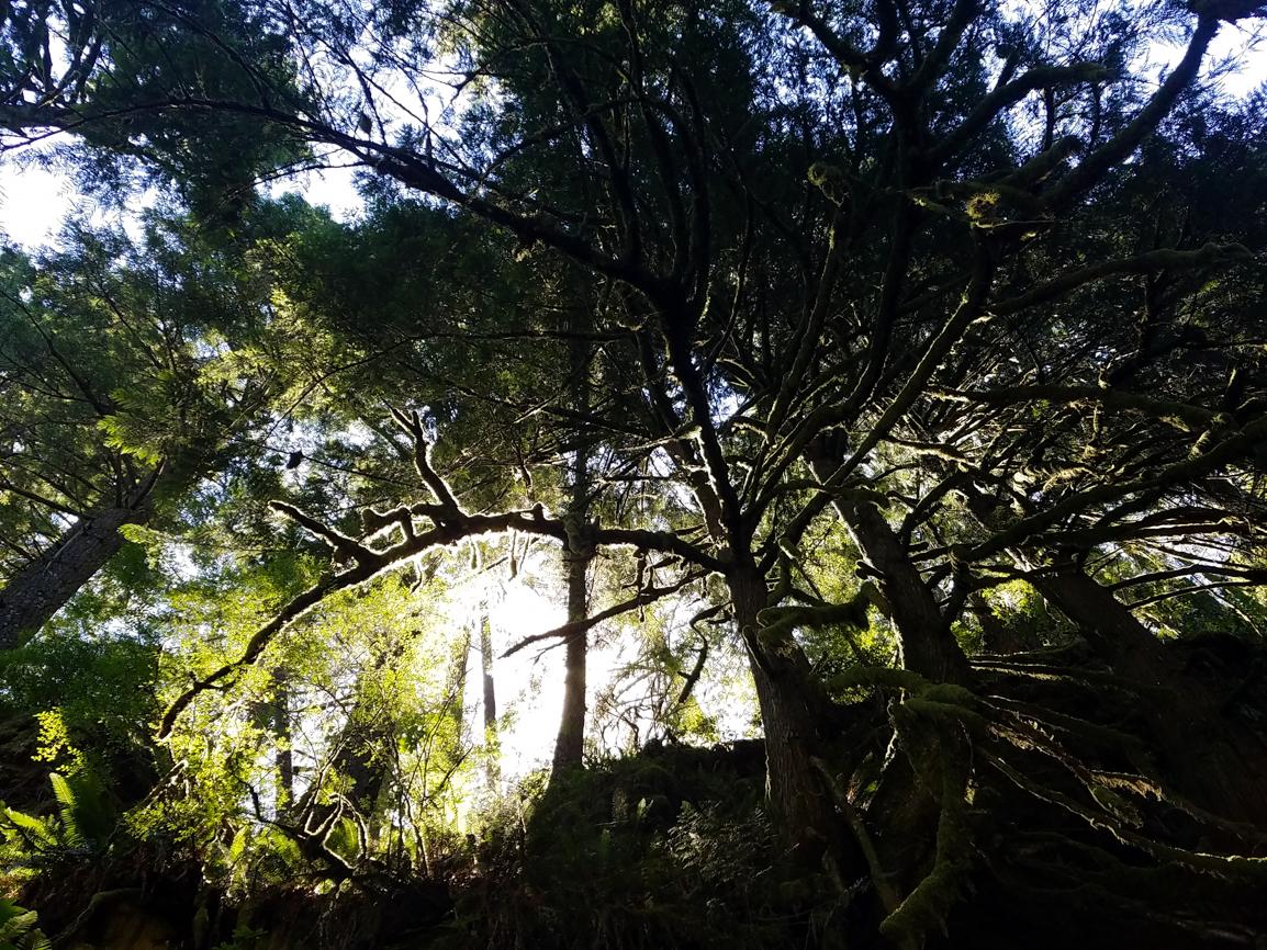 How Do You Say Oregon. Rainforest. Splendid Wonders Blog