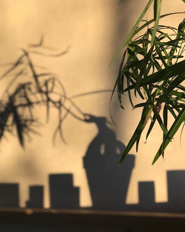 Shadows #skygge #lysskygge #spill #vinterlys #winterlight