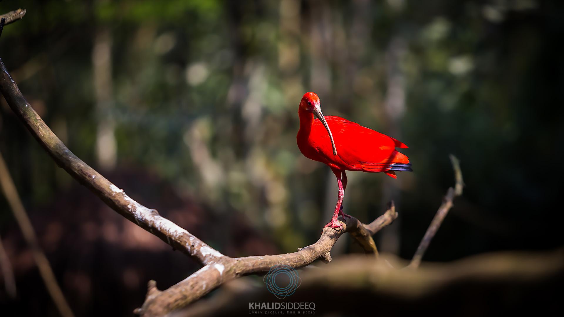 Iguacu-13.jpg