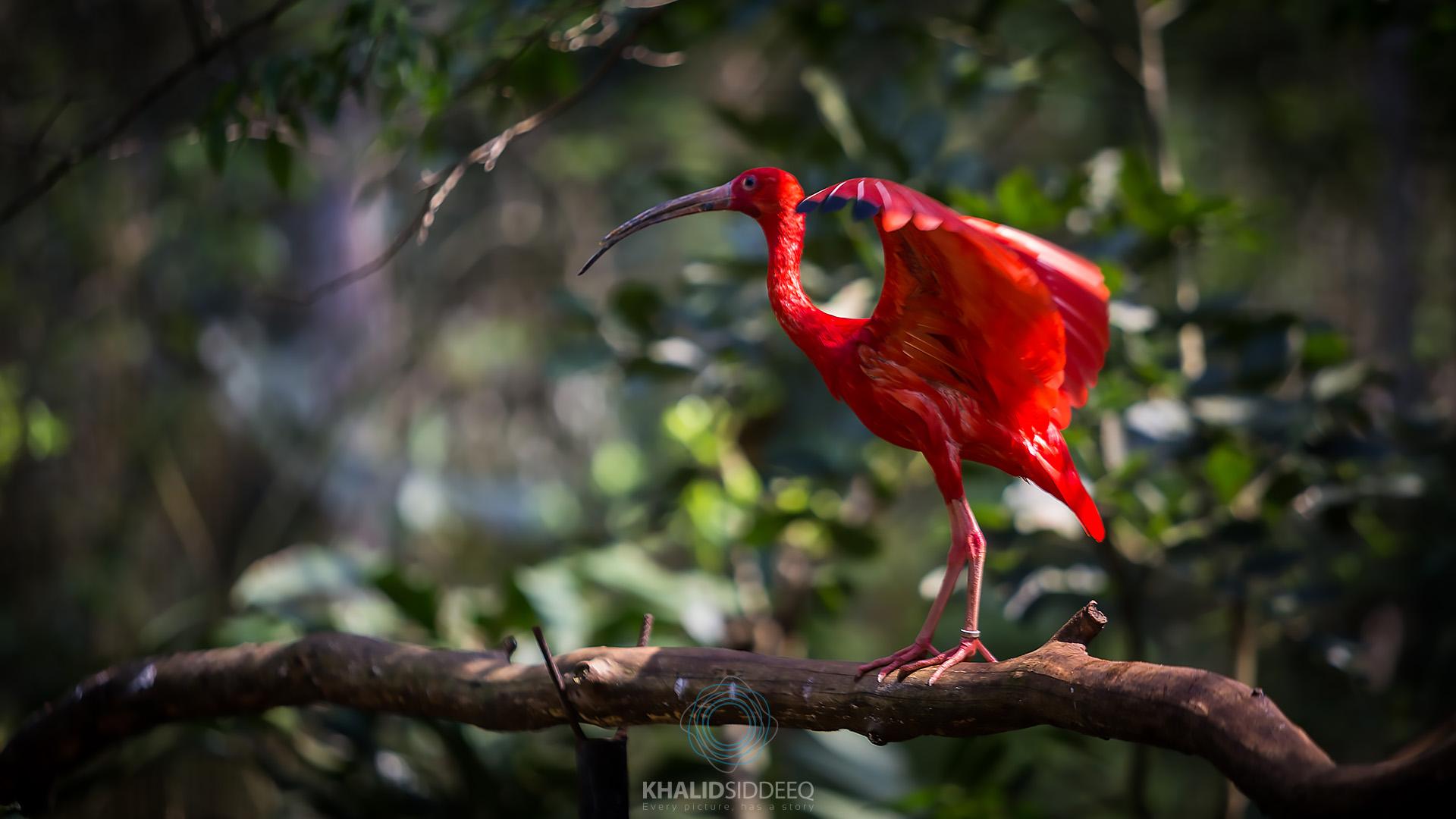 Iguacu-15.jpg