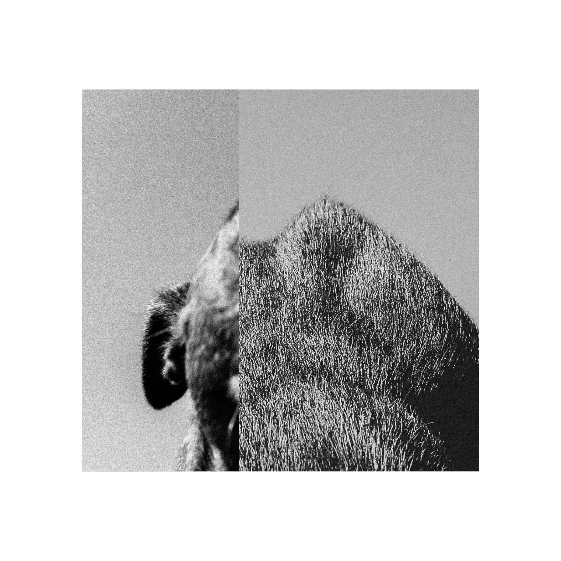 samana, samana music, samana Photography, abstract black and white, Rebecca Rose Harris