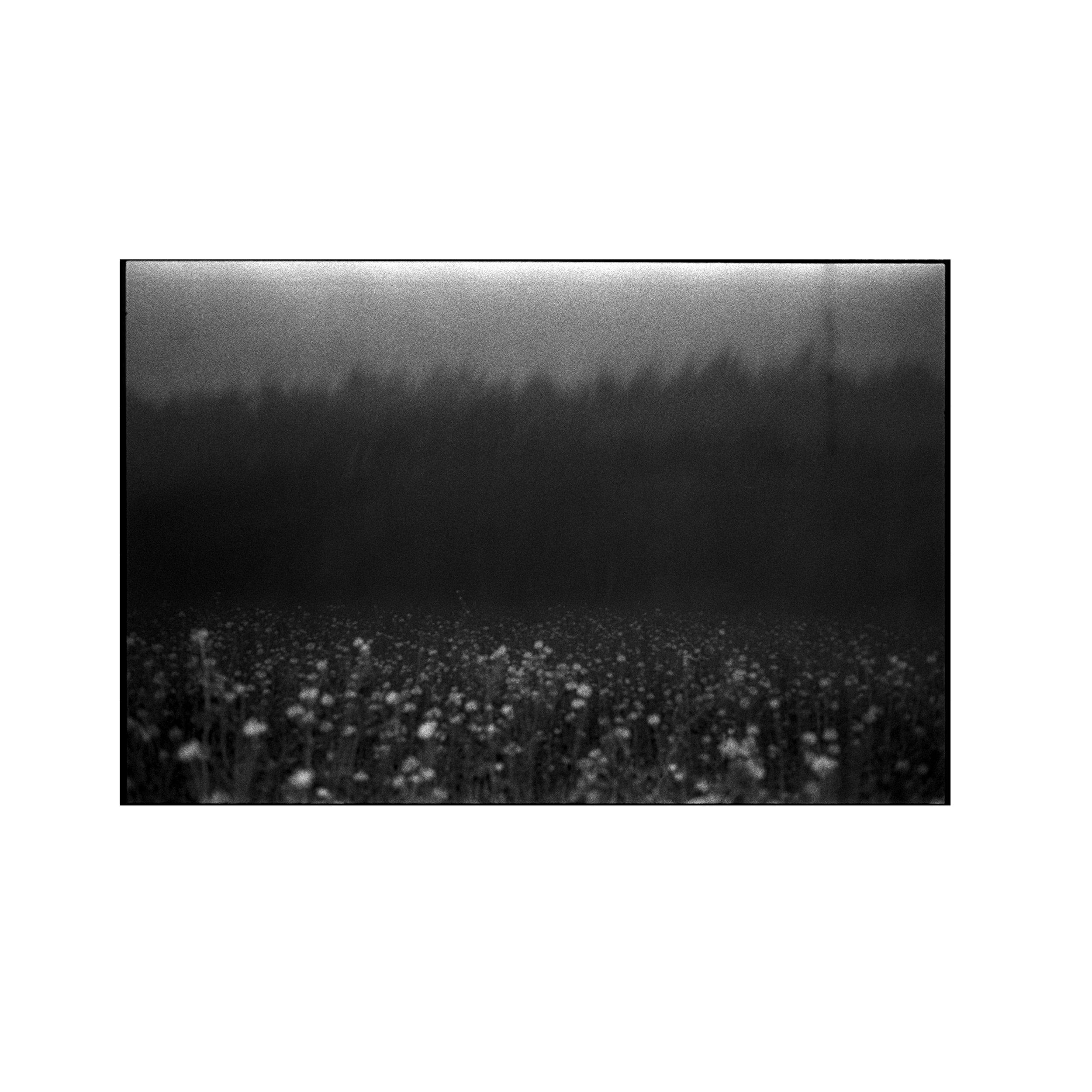 Samana, Samana music, Analogue Photography, Field of Flowers