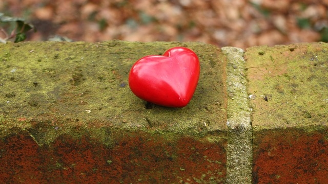 ....    Wieviel ist uns ein liebendes Herz wert ?    ..    What is the value of a loving heart?   ....