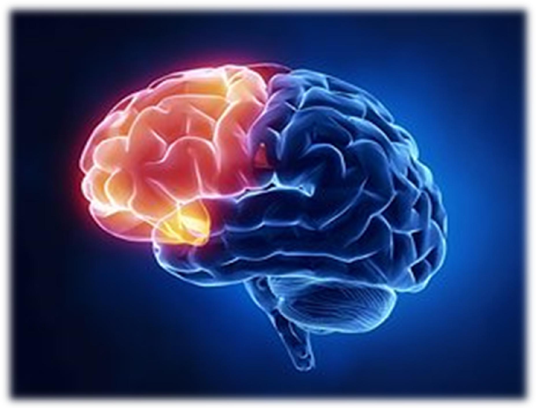 ....   Wir wissen alle, dass unser Gehirn höchst wichtig ist für unsere Lebensqualität. Viel Wissenswertes ist uns von der Neurologie in letzter Zeit weitergereicht worden. Heute geht es um den Frontallappen, das Organ der 'Zivilisation', und um eine denkwürdige Begegnung mit Dr. Baldwin USA.   ..   Everybody knows that our brains are vitally important for our quality of life. A lot of valuable new information on neurology has come to our attention in the recent past. Today we will consider the frontal lobe, the organ of civilization, and a memorable encounter with Dr. Baldwin in Georgia, USA.   ....