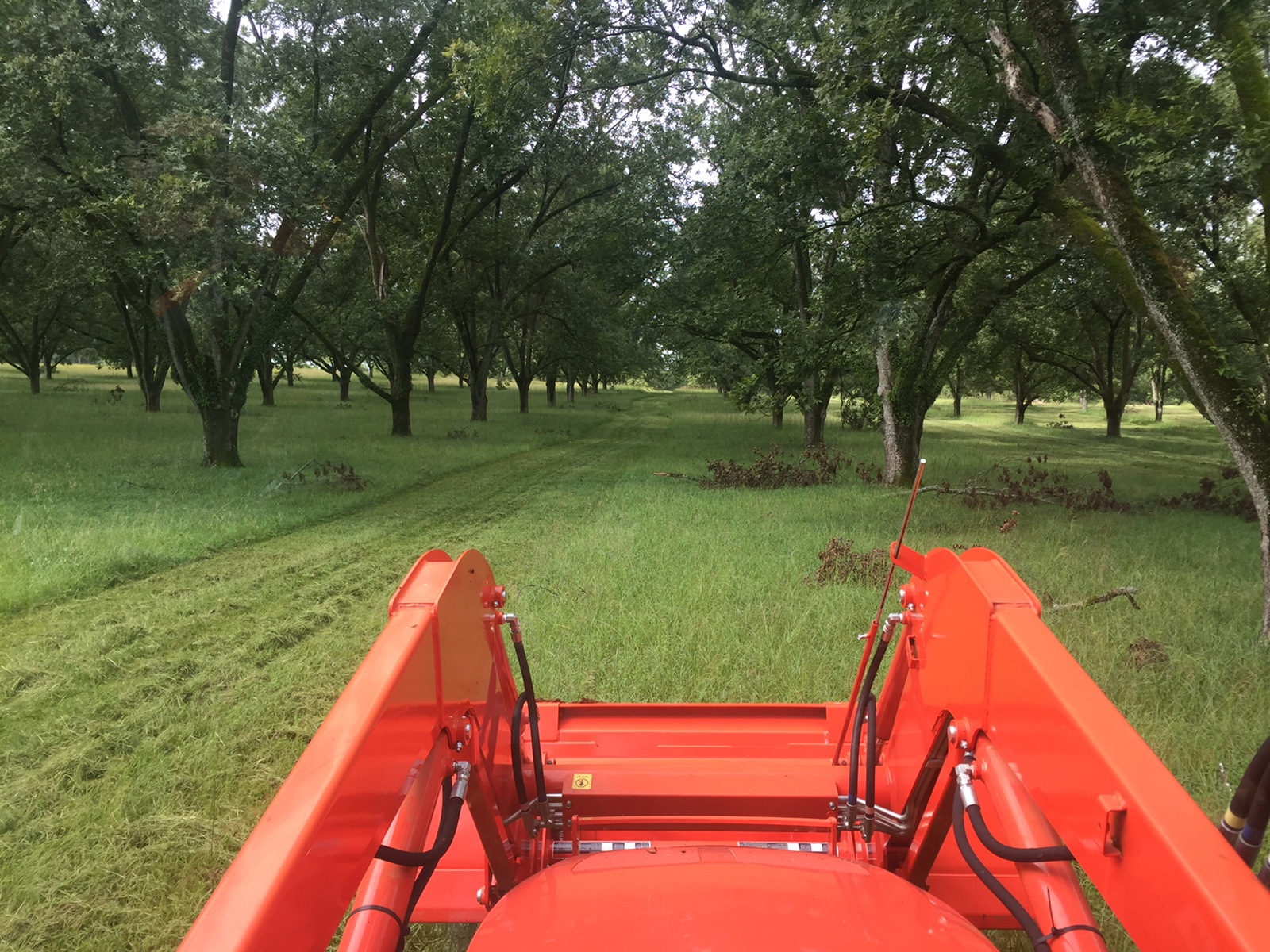 Pecan Farming - with Jason Elam