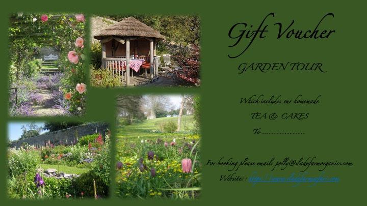 Garden Gift Voucher Template.jpg