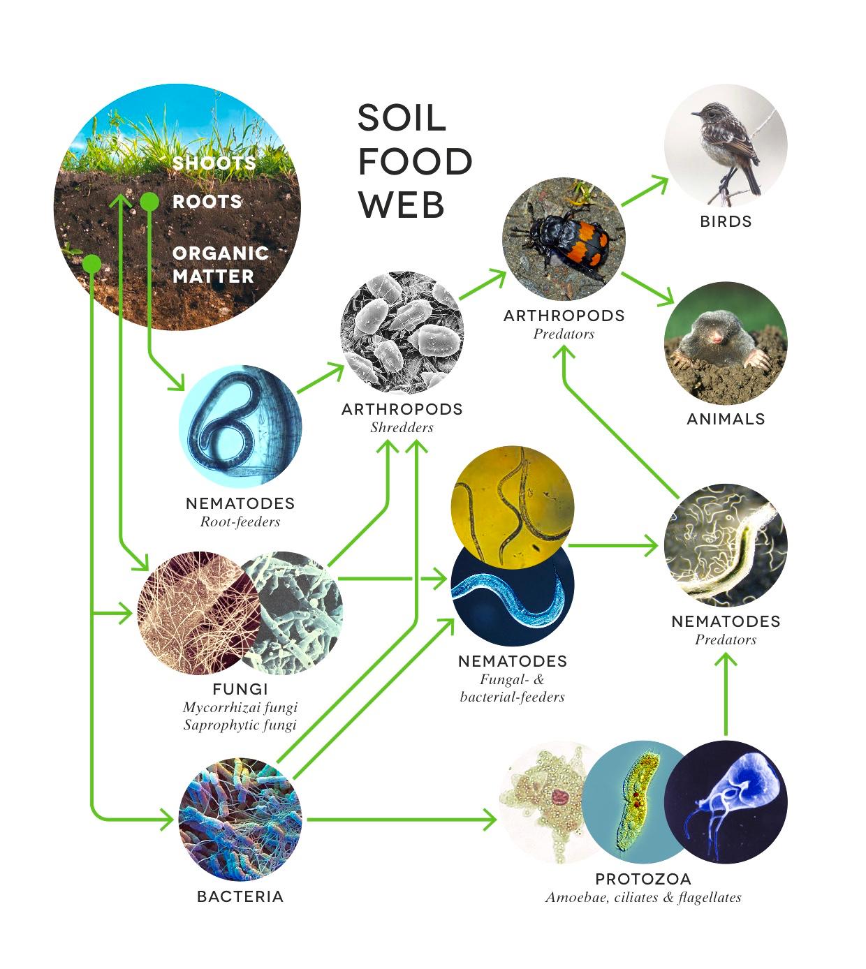 SoilFoodWeb_Large_2.0ß.jpg