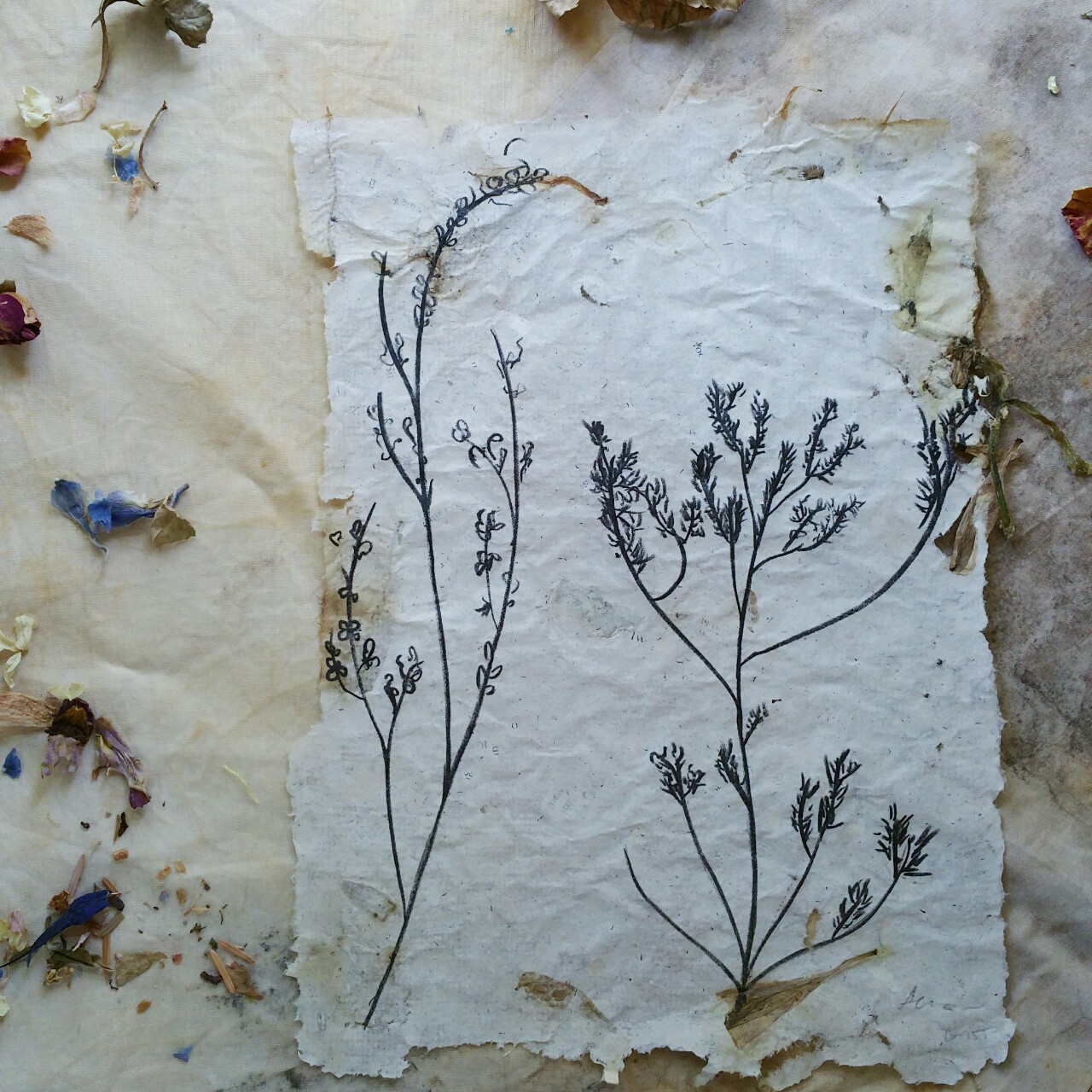 collaboration between anny and printmaker  kristin sarette ; anny made the paper using natural materials, books, and flower petals, stems, and leaves, as well as designed and sketched on the stone, while kristin did the hand printing.