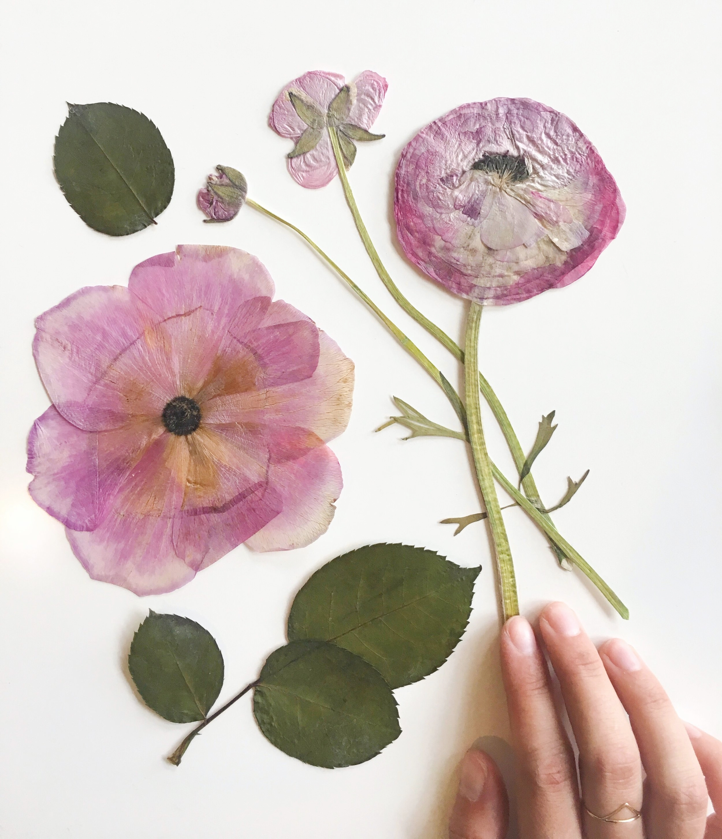 Lets save your flowers -
