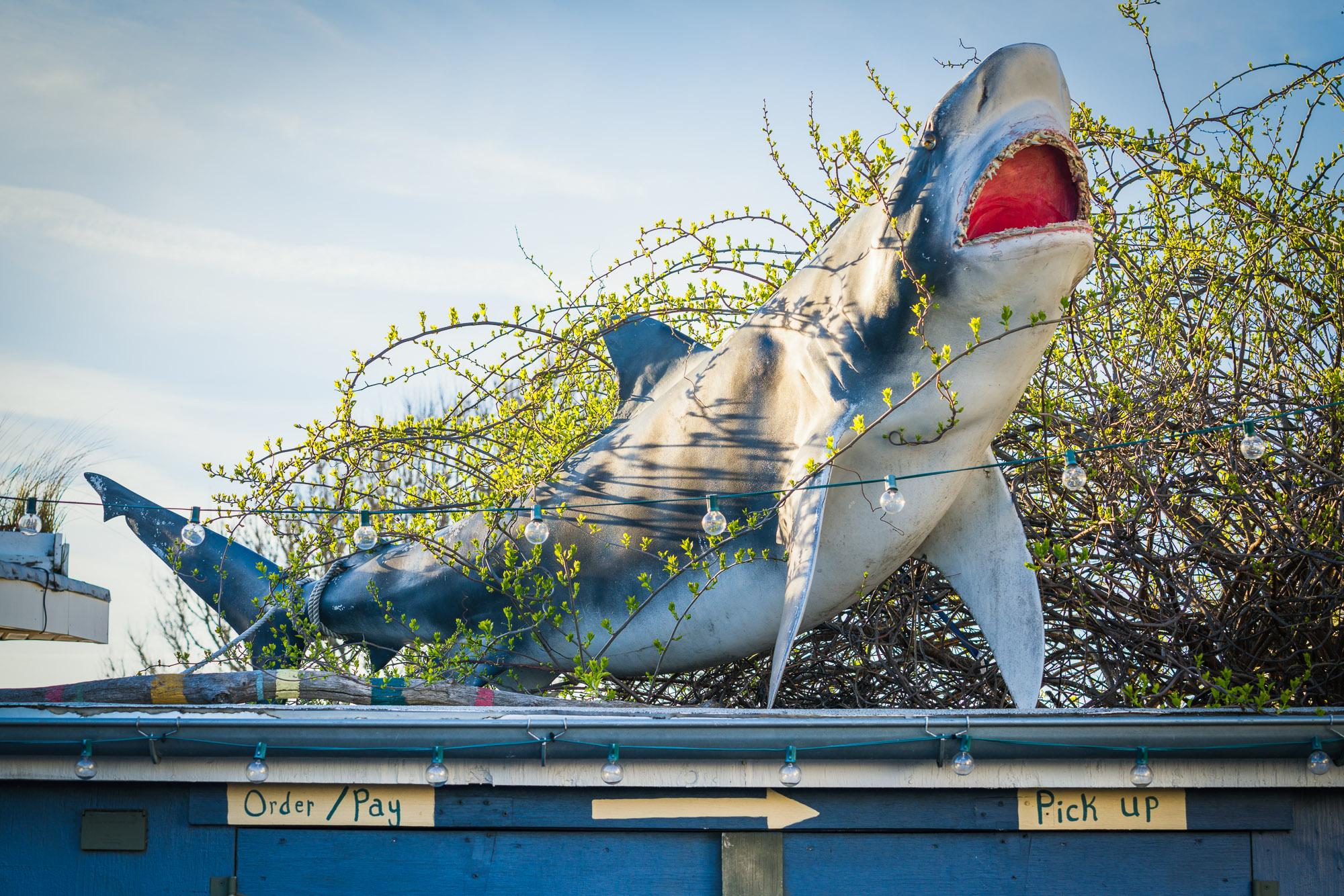 Shark Bites, Montauk