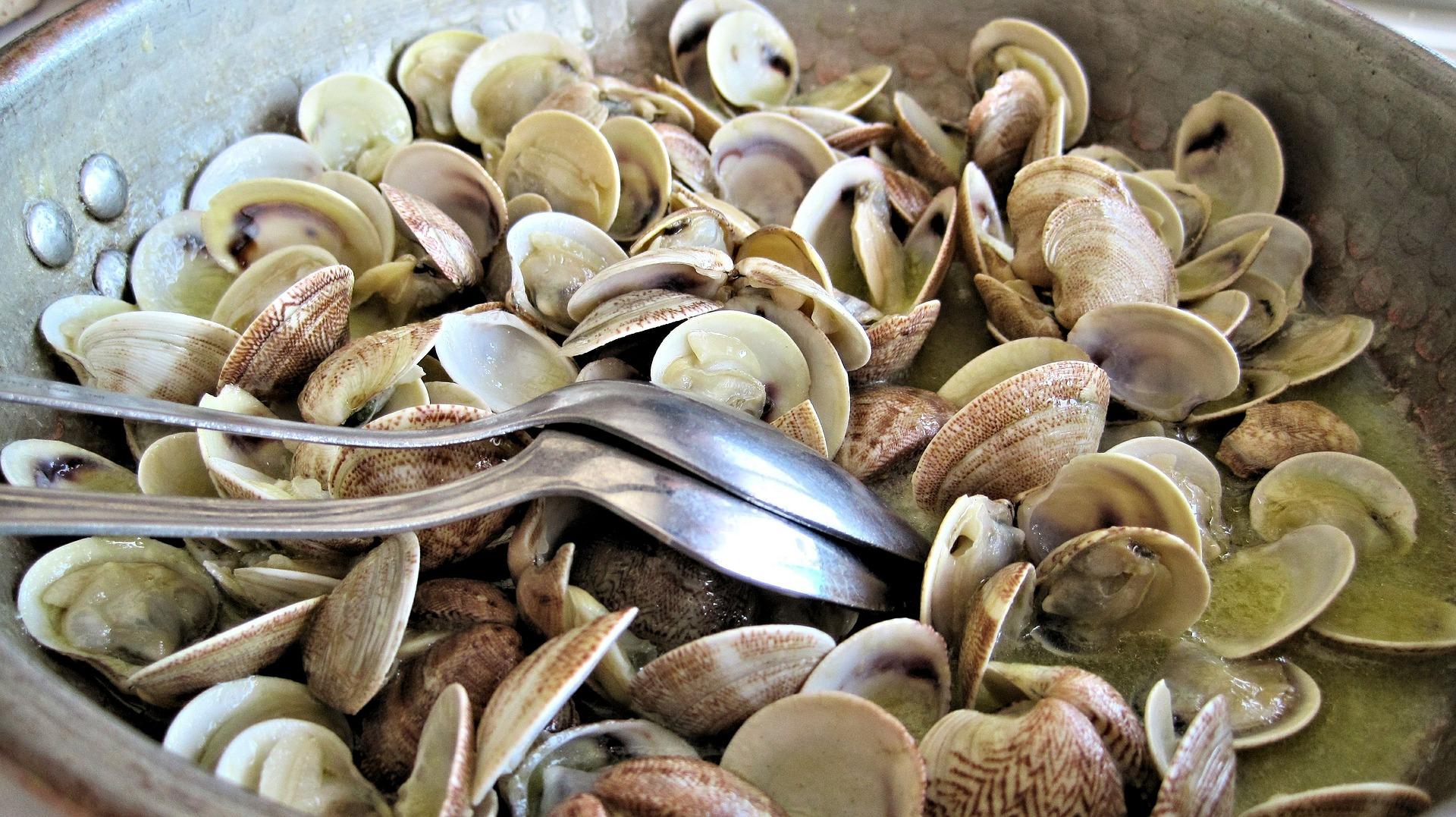 steamed-clams-603110_1920.jpg