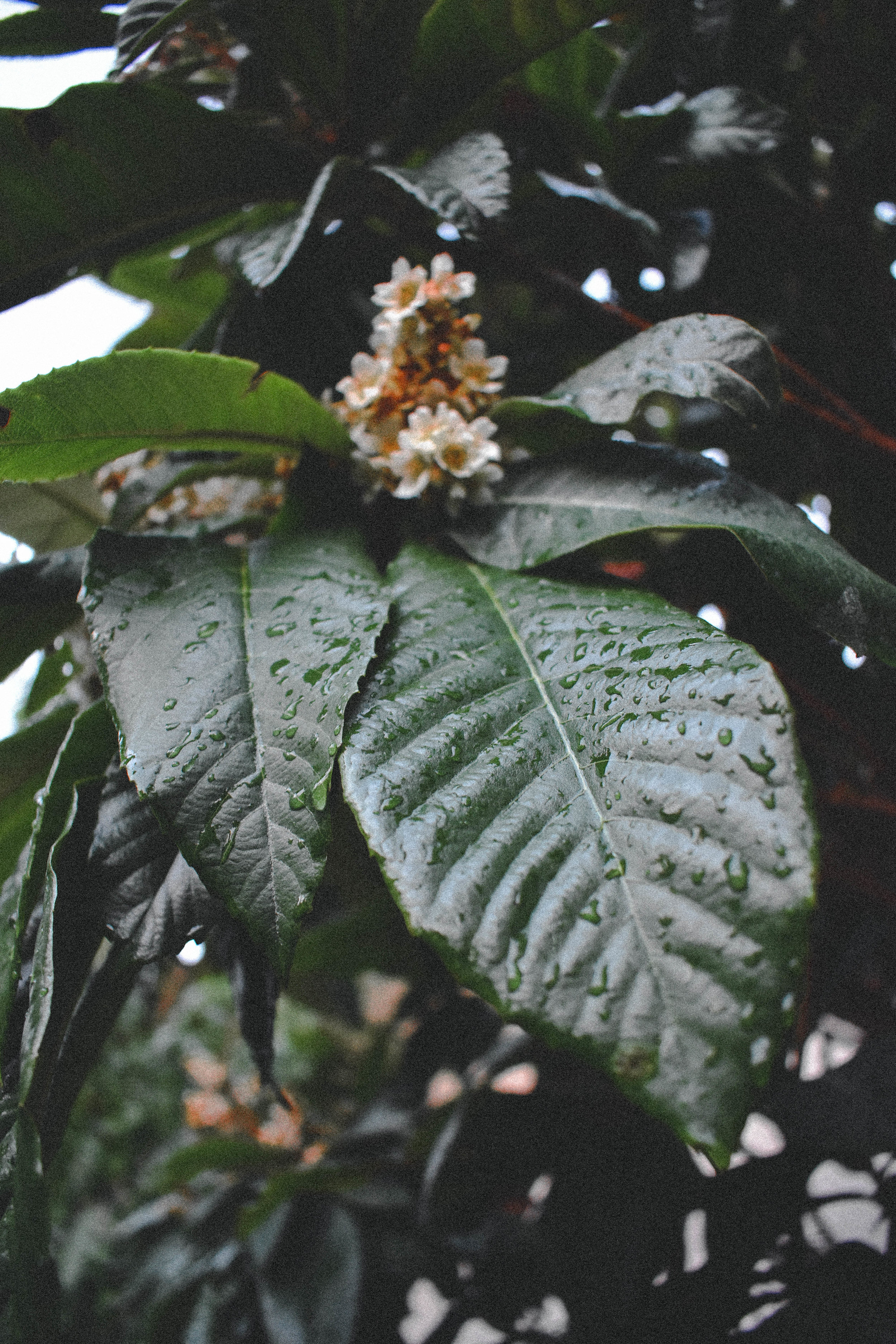foliage2-1-of-1_31071595255_o.jpg