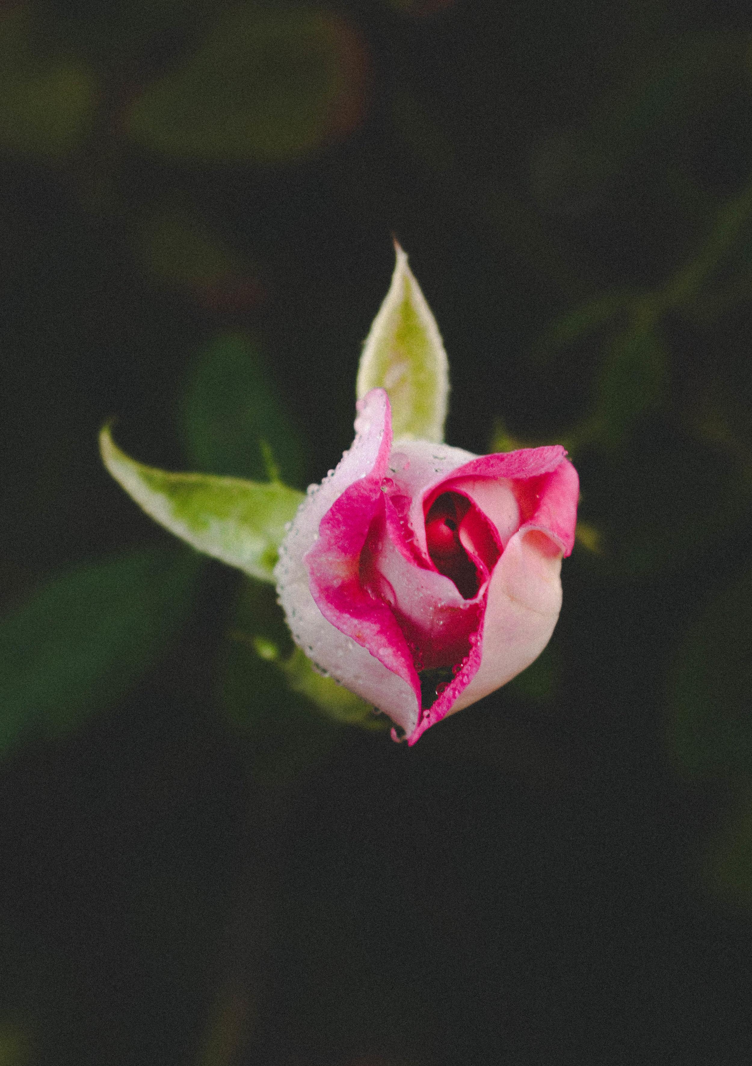 flower-_31291507725_o.jpg