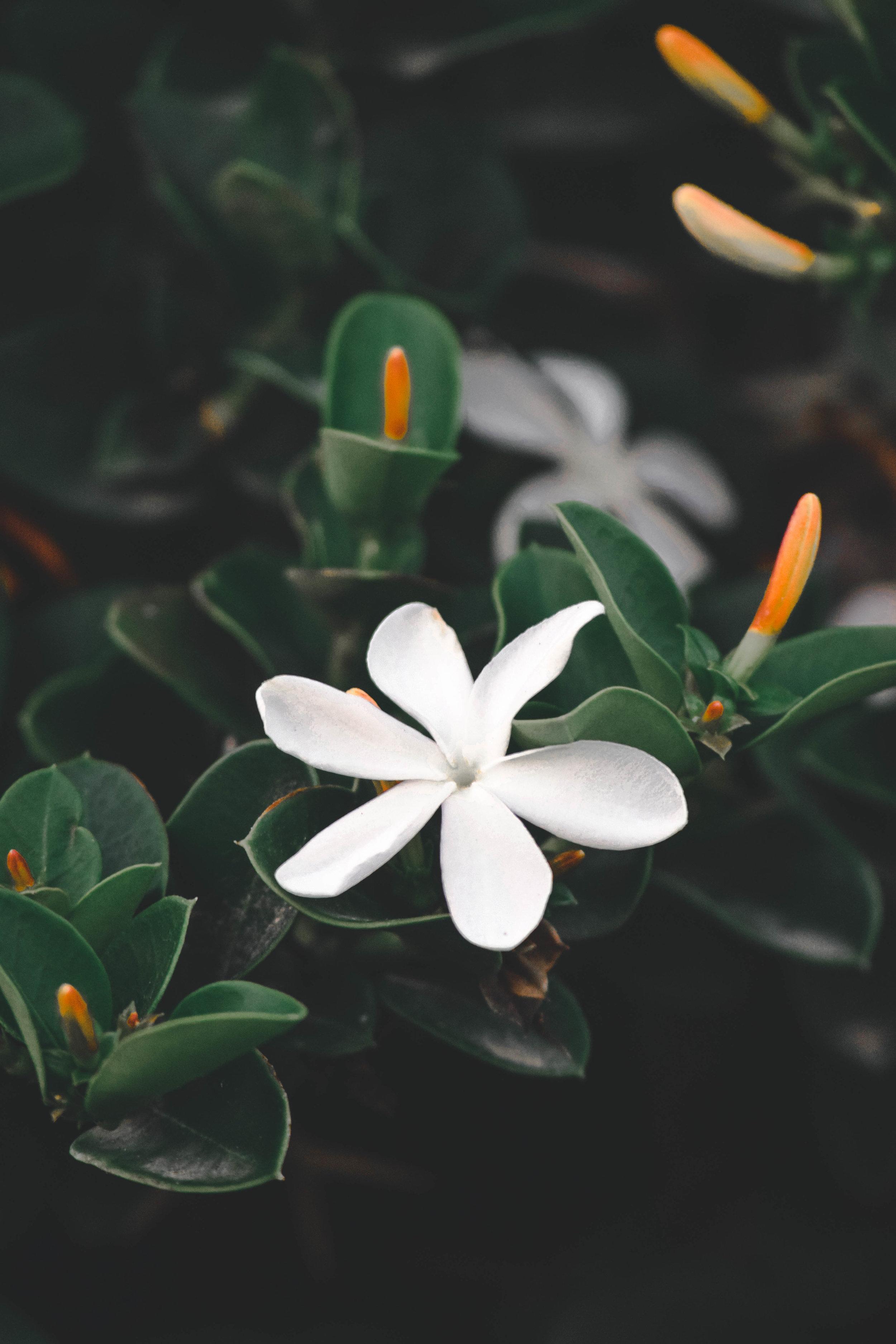 plant-.JPG