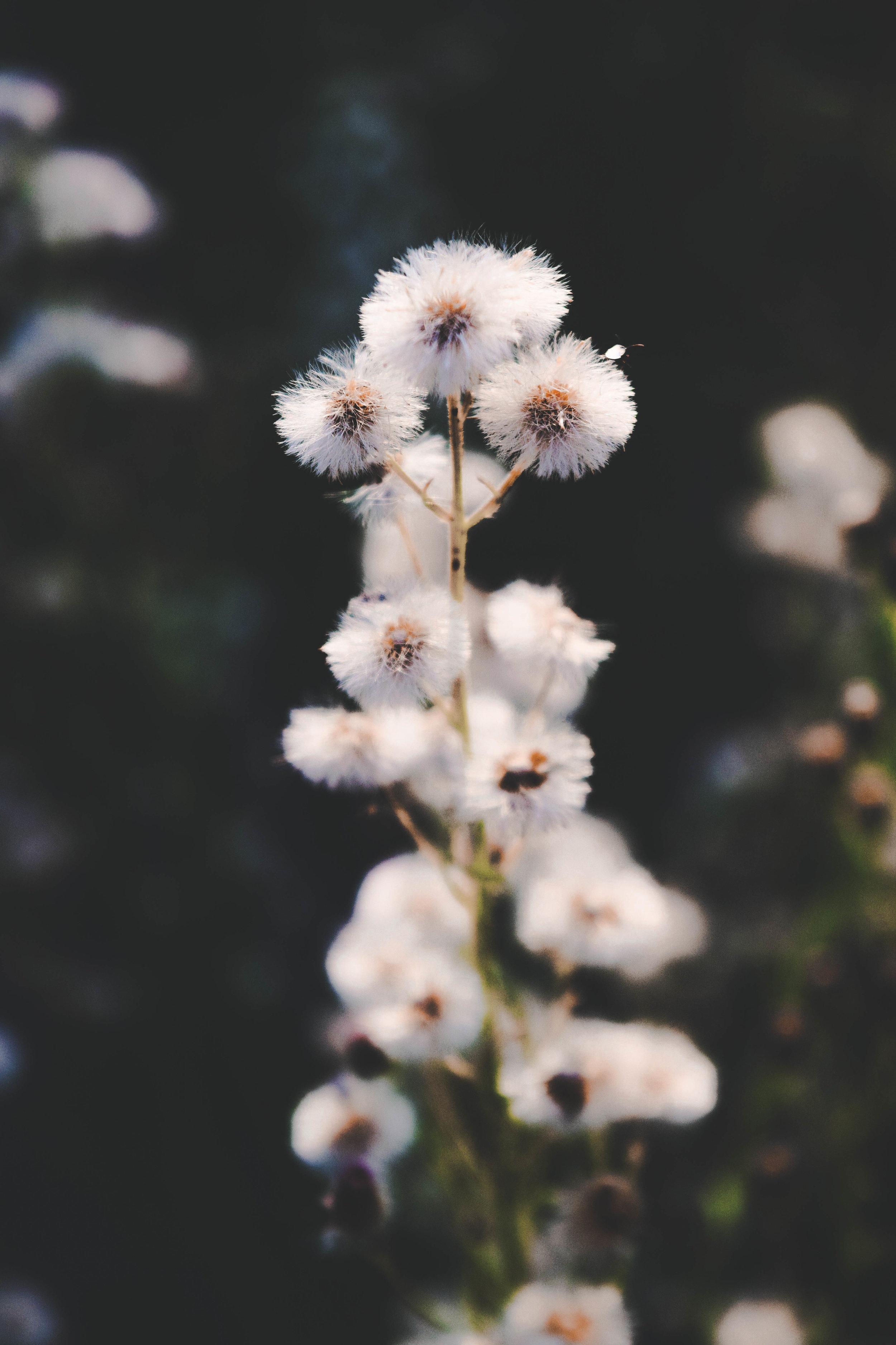 plant--3.JPG