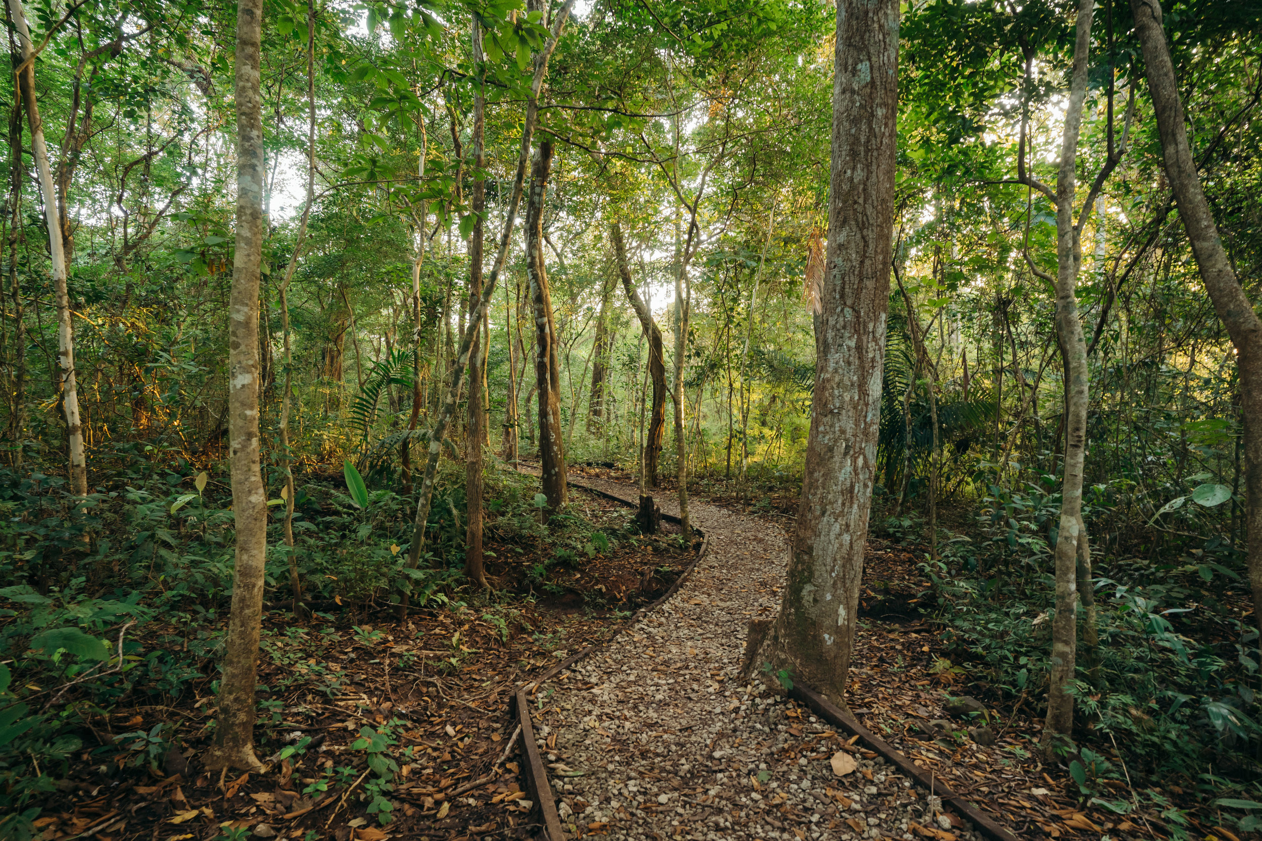 El Roble trail