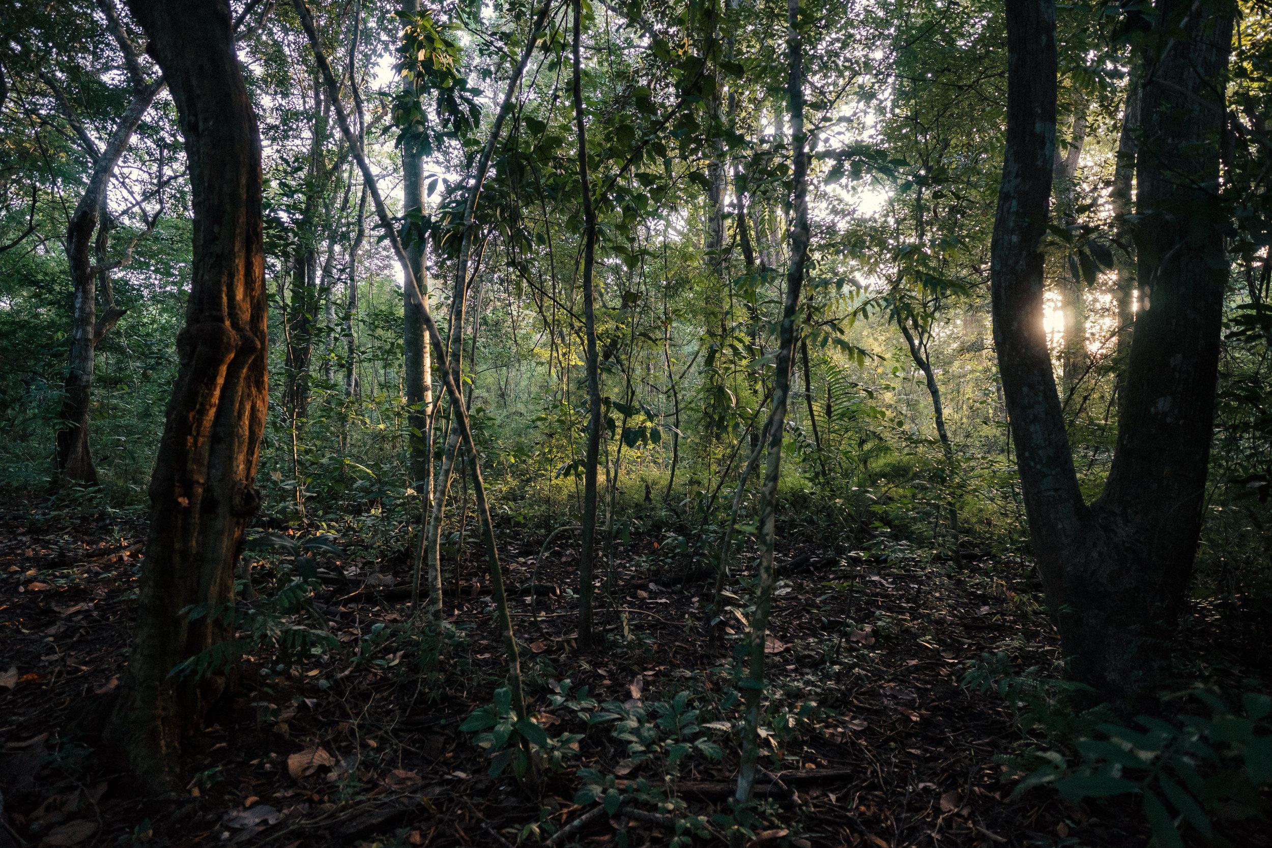 Dry tropical forest habitat