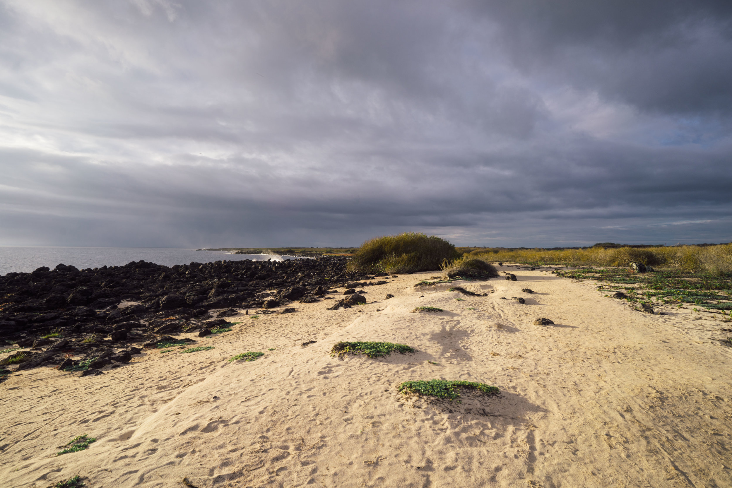 - Entering the beach of La Lobería in the beautiful sunset light, where we would soon encounter a good-size colony of Galápagos sea lions displaying their courtship behavior, territorial quarrels, and amazing acrobatics in the waves.