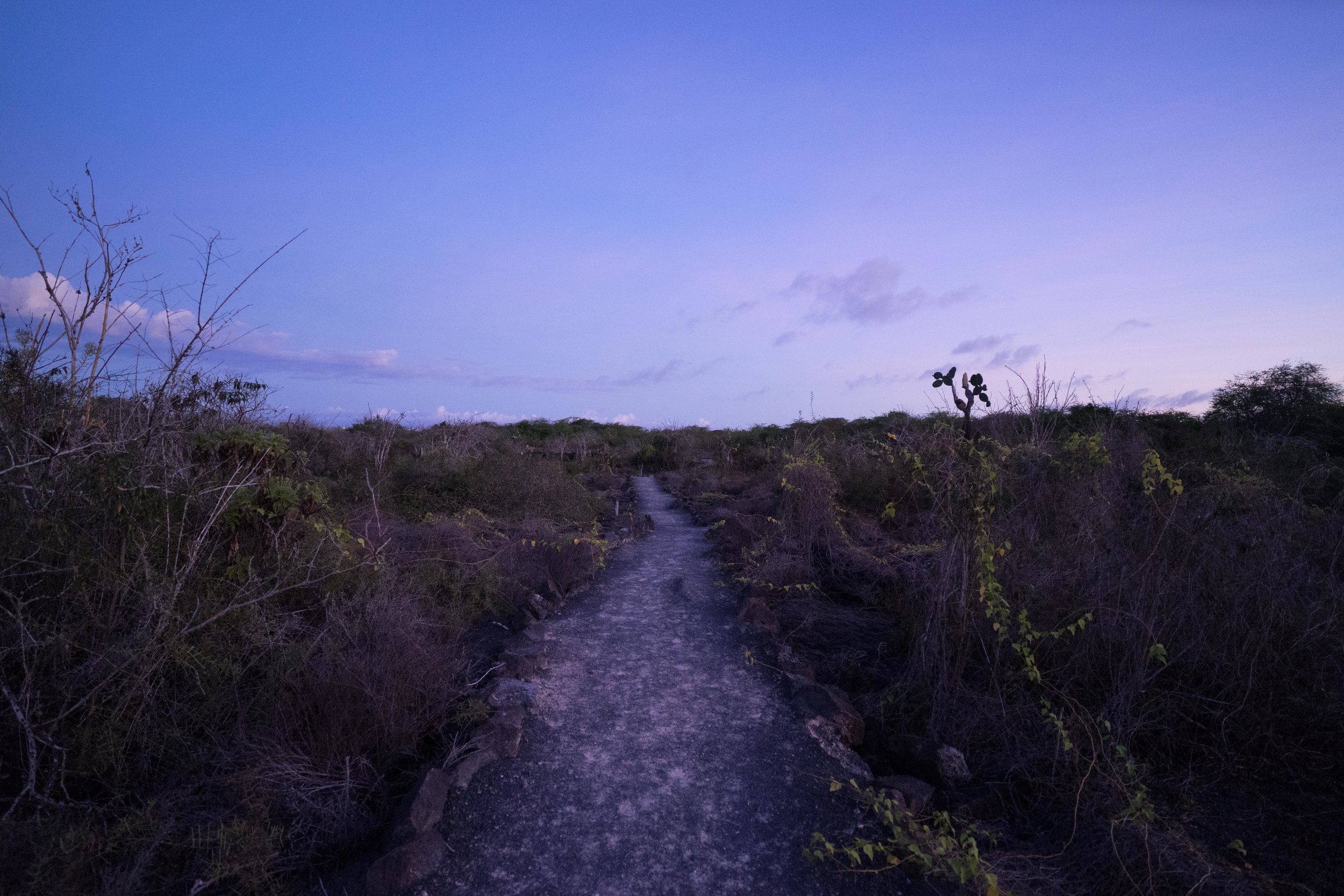 The trail connecting the Humedales/Wetlands to the Giant tortoise breeding center