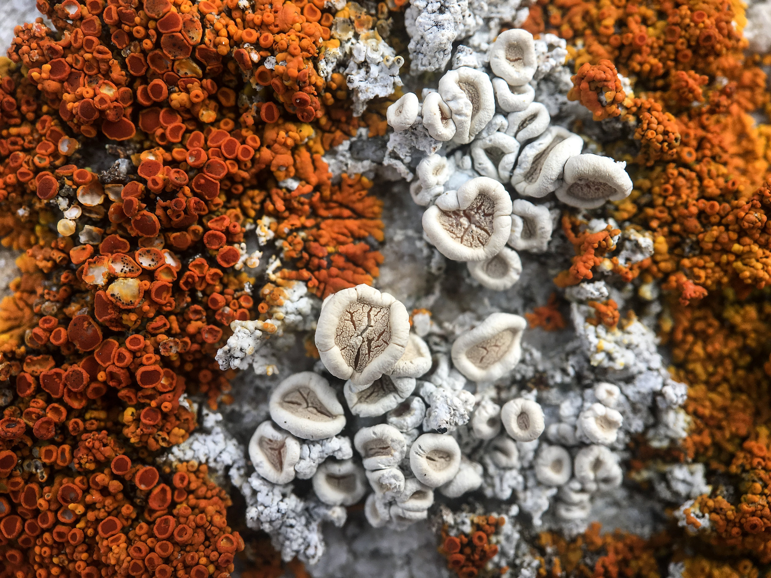 - Approaching the rocks in the Yendegaia bay a different world appears. The incredible diversity of shapes and patterns of the crustose and foliose lichens on a square inch of those rocks is a source of amazement for a nerd like me. I'm in awe of such micro-organisms but know little of their scientific names. A