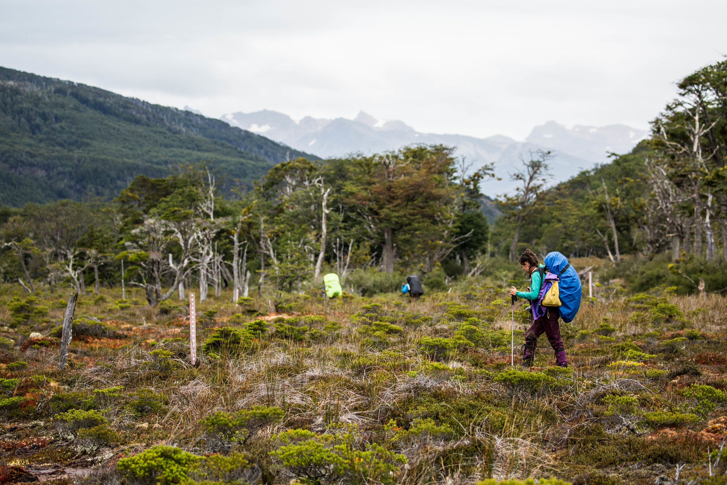 Following the trail through an impressive peat bog area of the park.