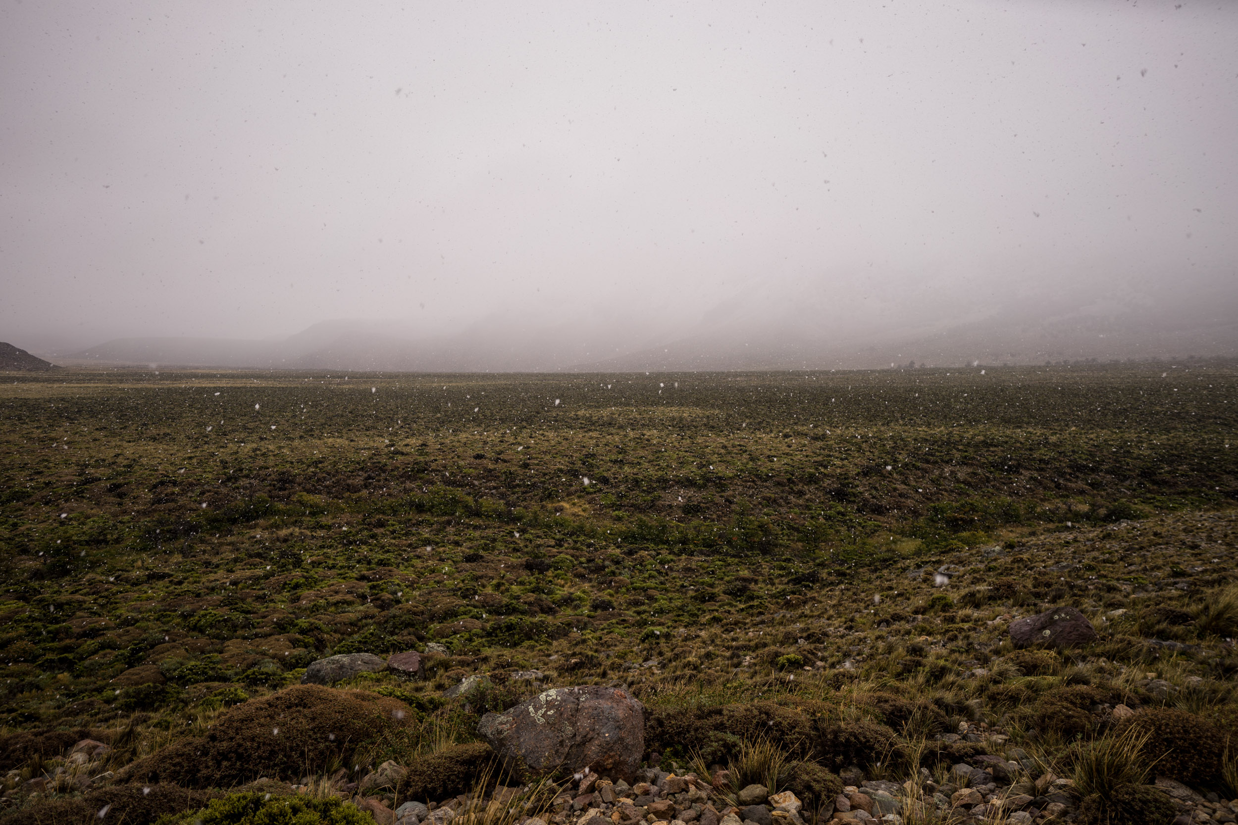 - The first snowfall of the season contrasting with the beautiful, green vegetation of the steppe at the isolated Ñandú outpost (photo by Andreea Lotak)