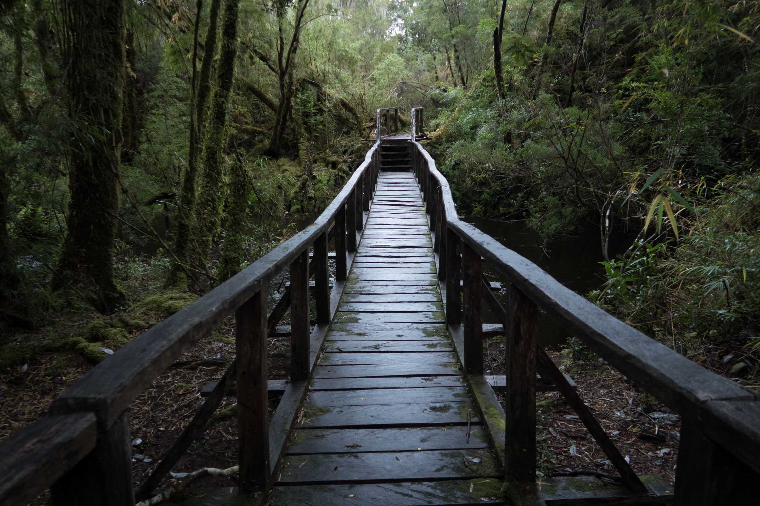 One of the boardwalk sections on the trail