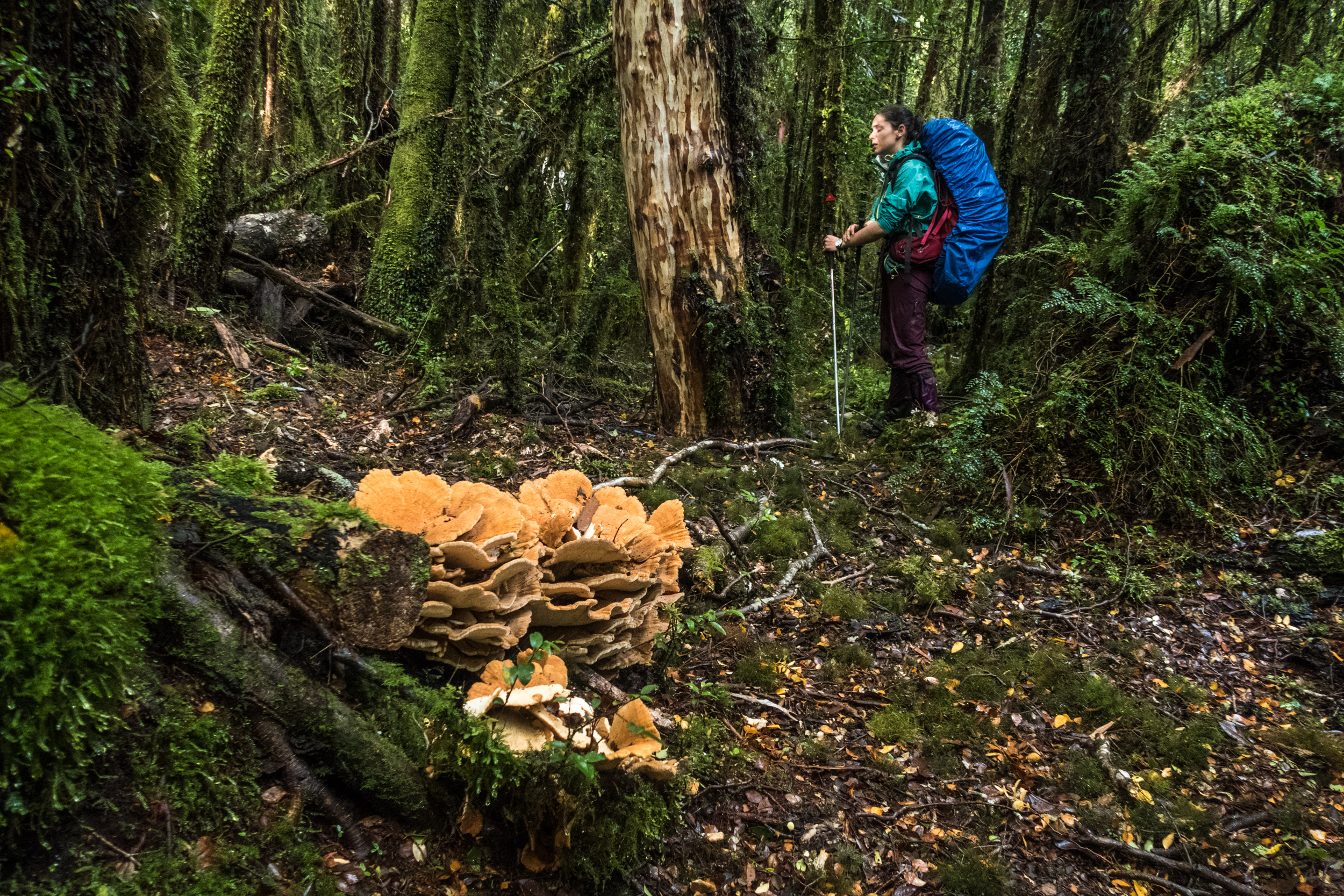 Lush vegetation and plenty of mushrooms in the old-growth forest section approaching Inio