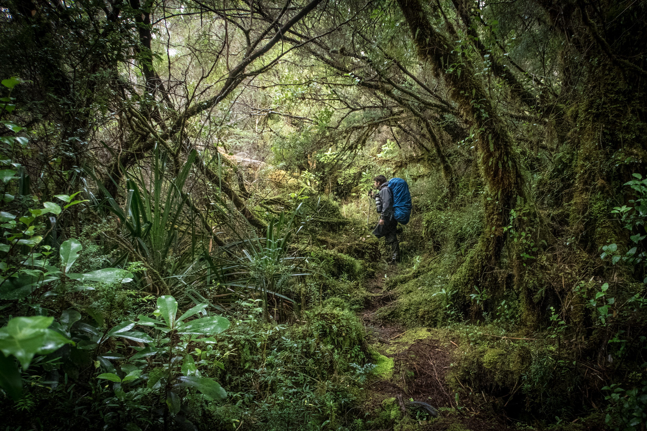 ... and the lush temperate rainforest